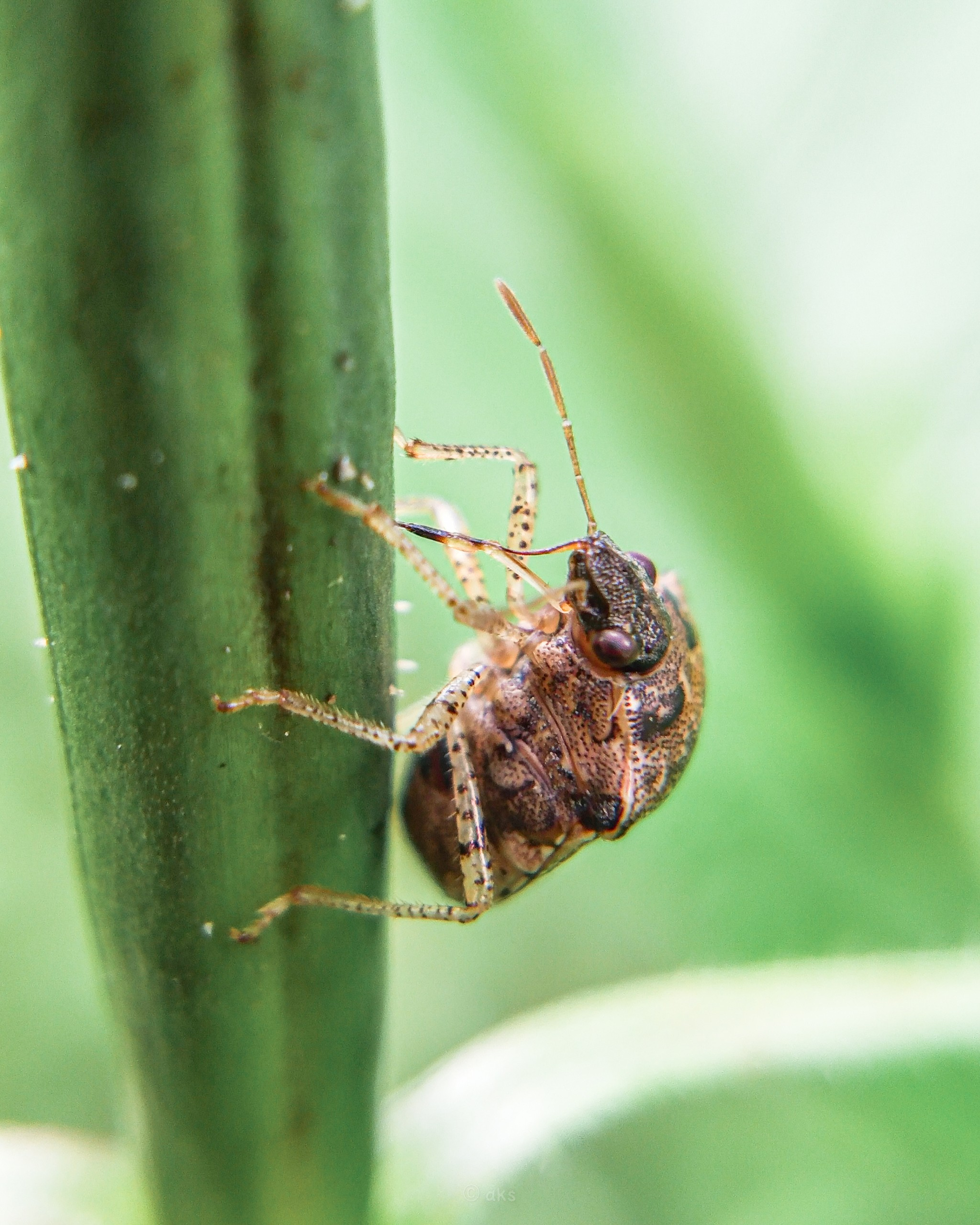 Small wild insect on focus