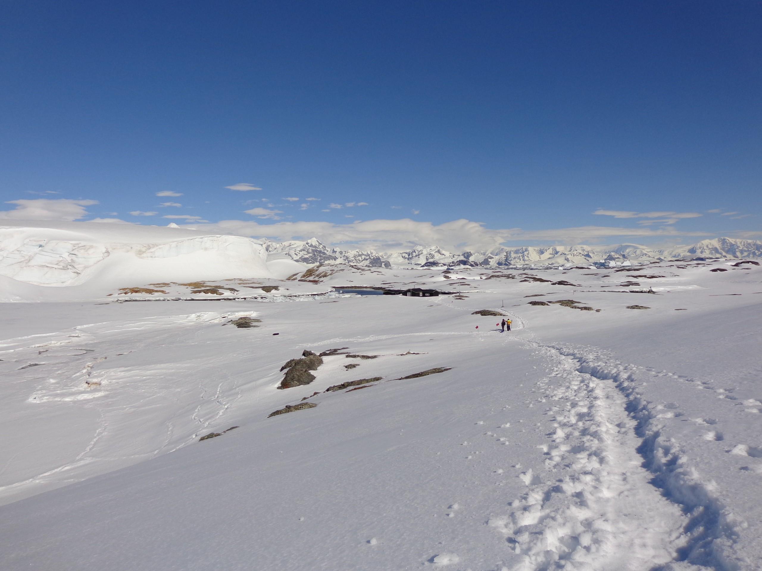 Snowy Winter Panorama