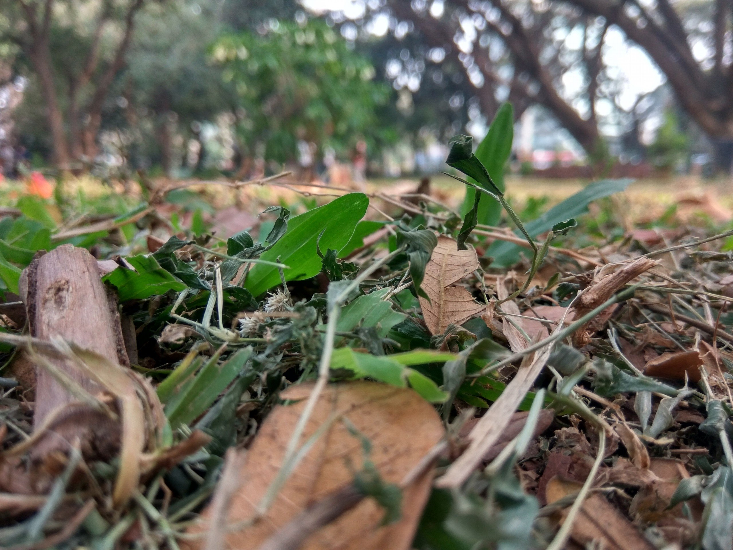 Some dry leaves and grass