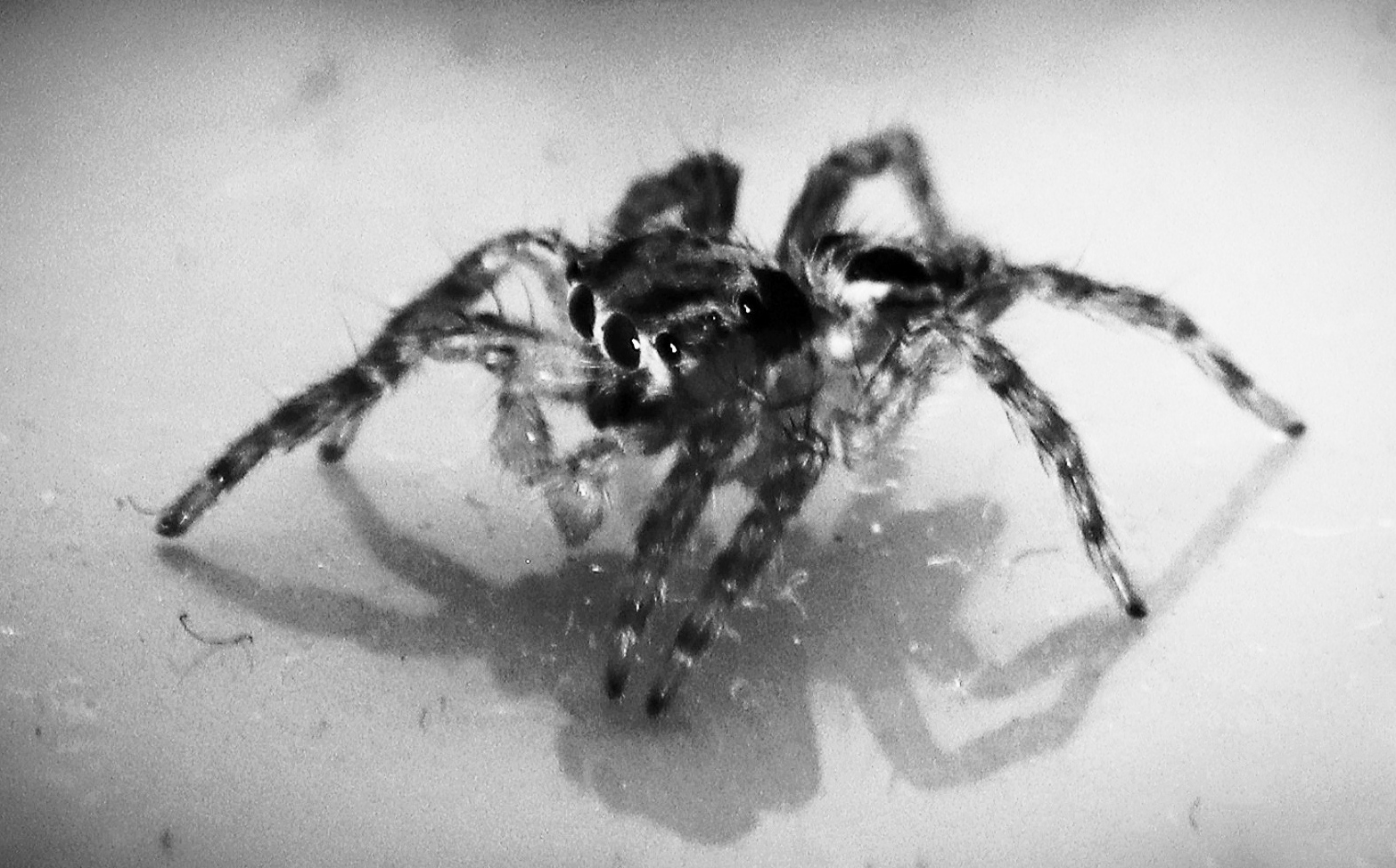 Spider on Black and White
