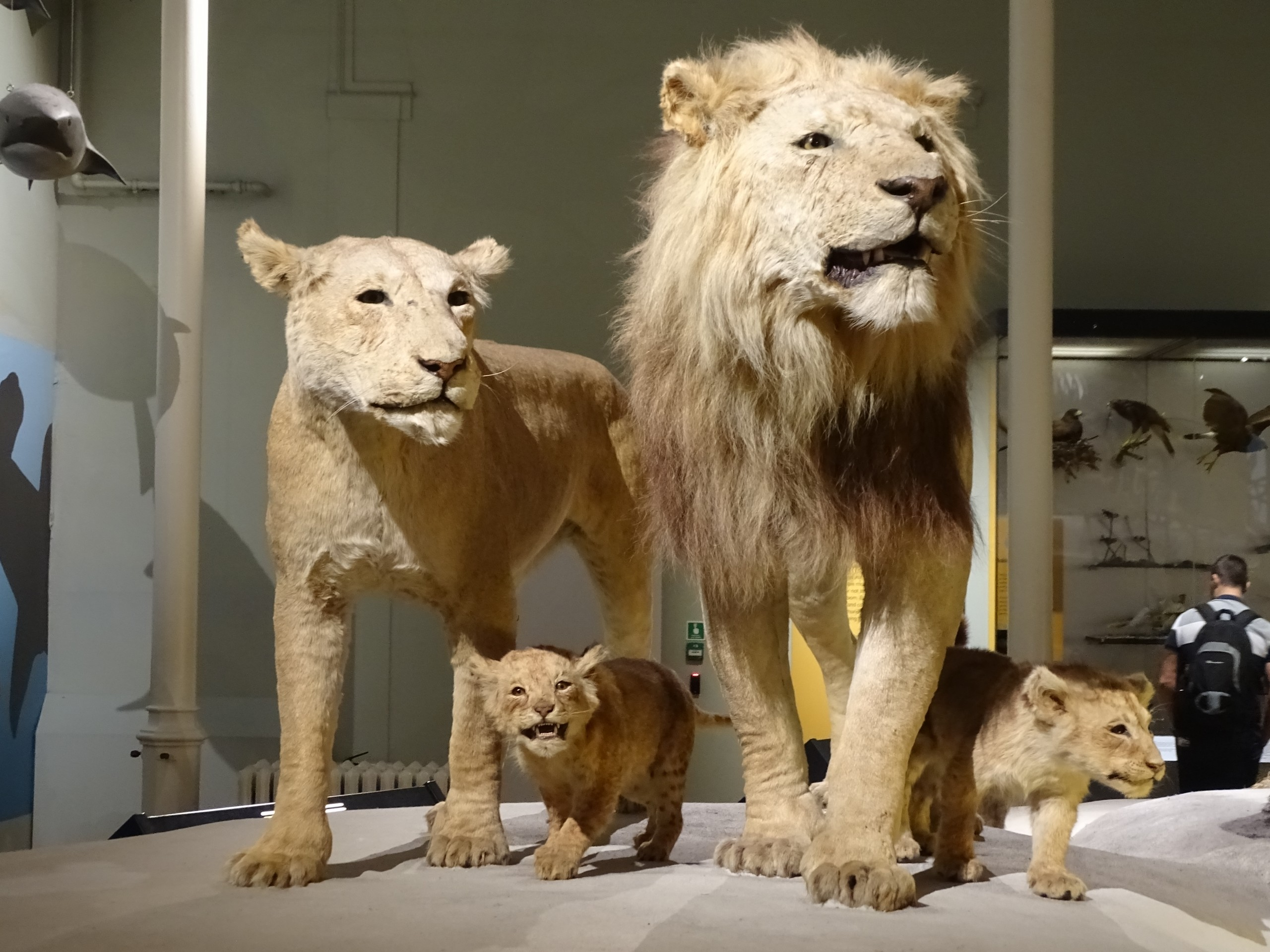 Staute of a Lion Family