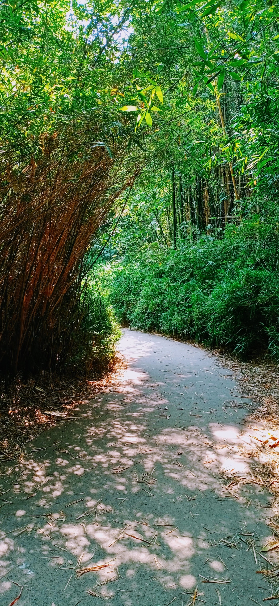The Bamboo trail