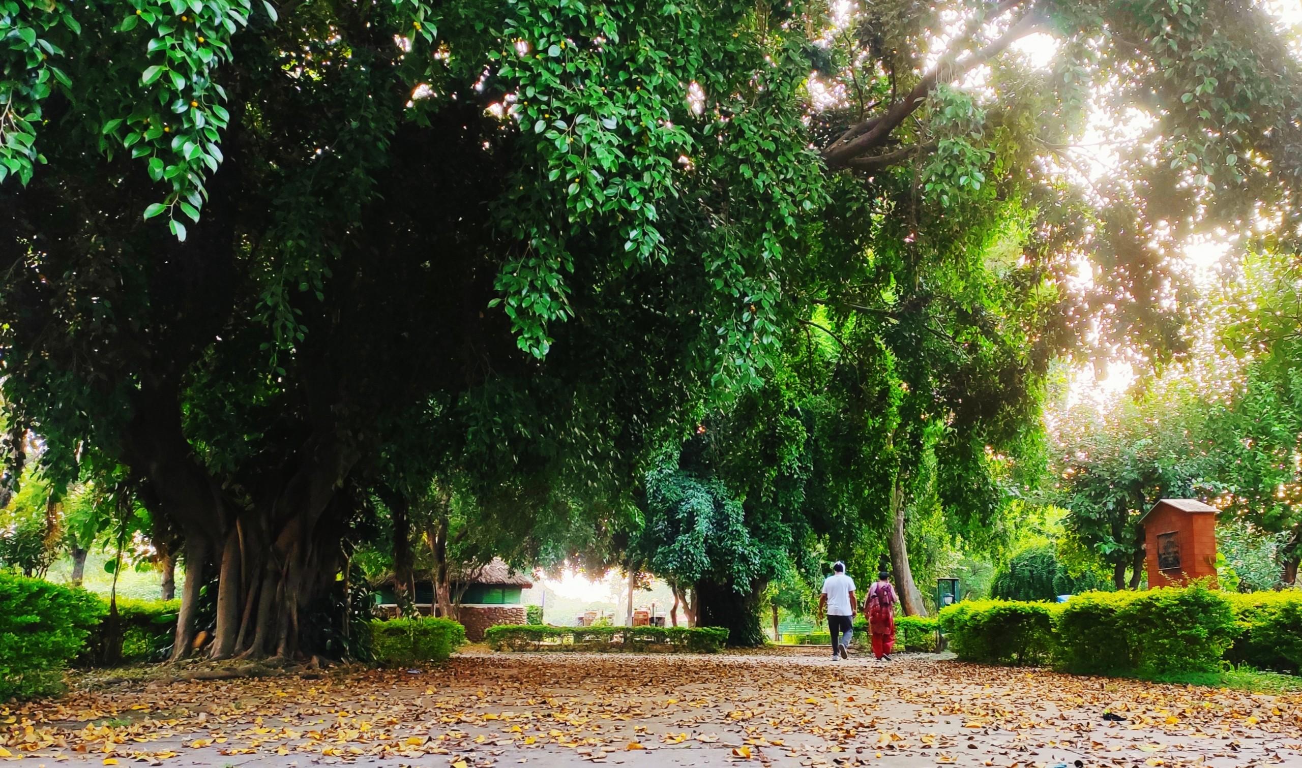 Park for walking