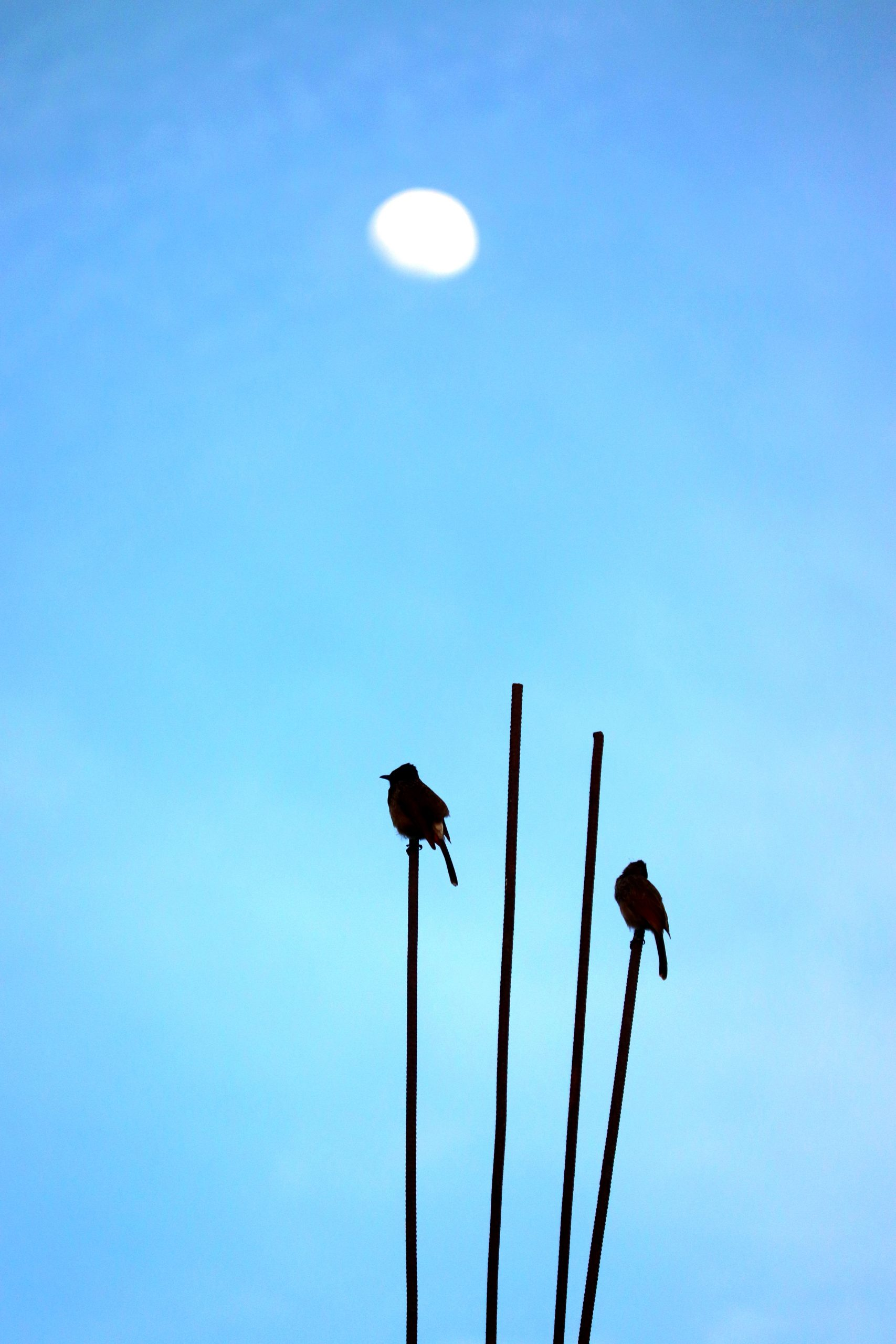 Two Birds on a Stick