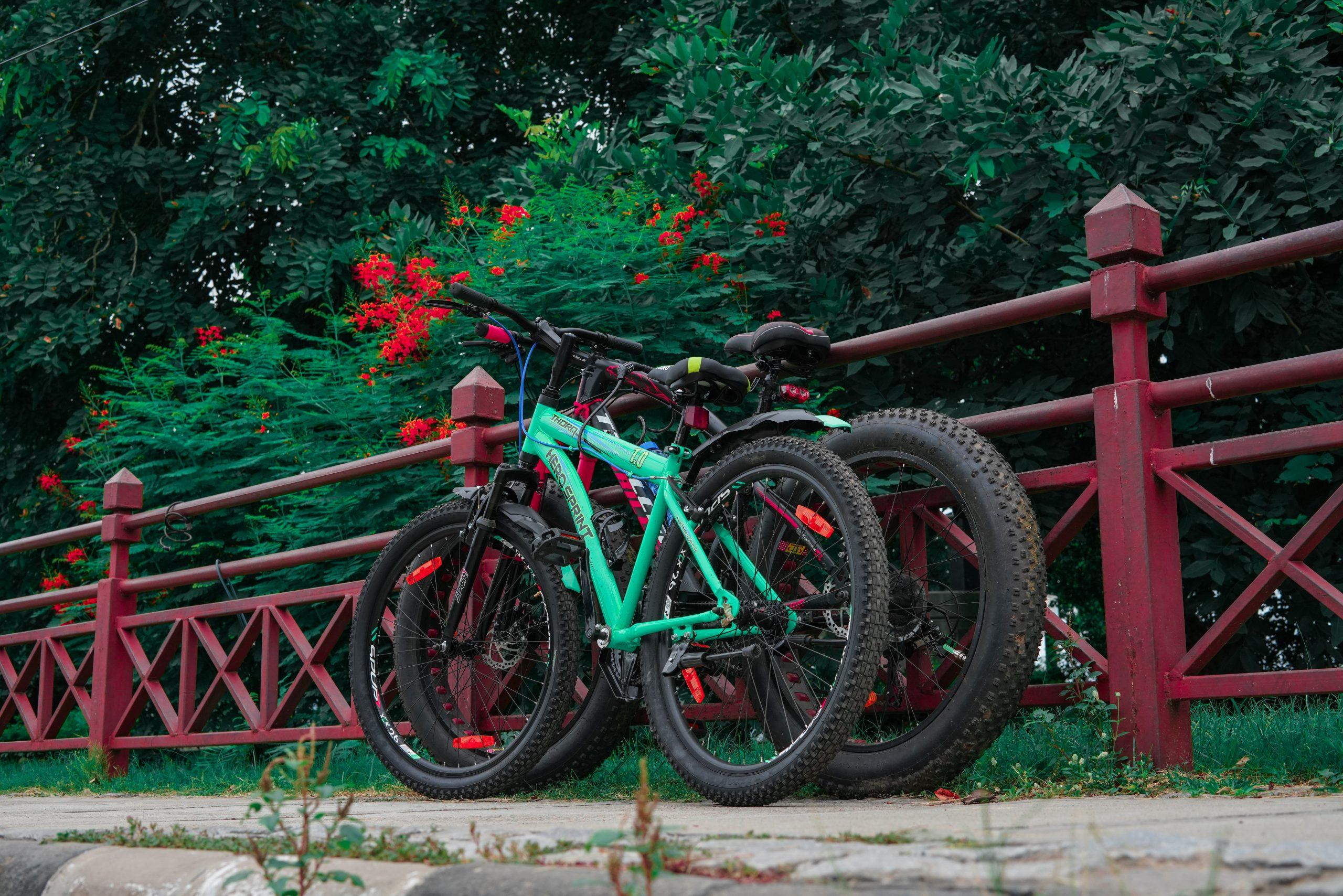 Two bicycle and green nature