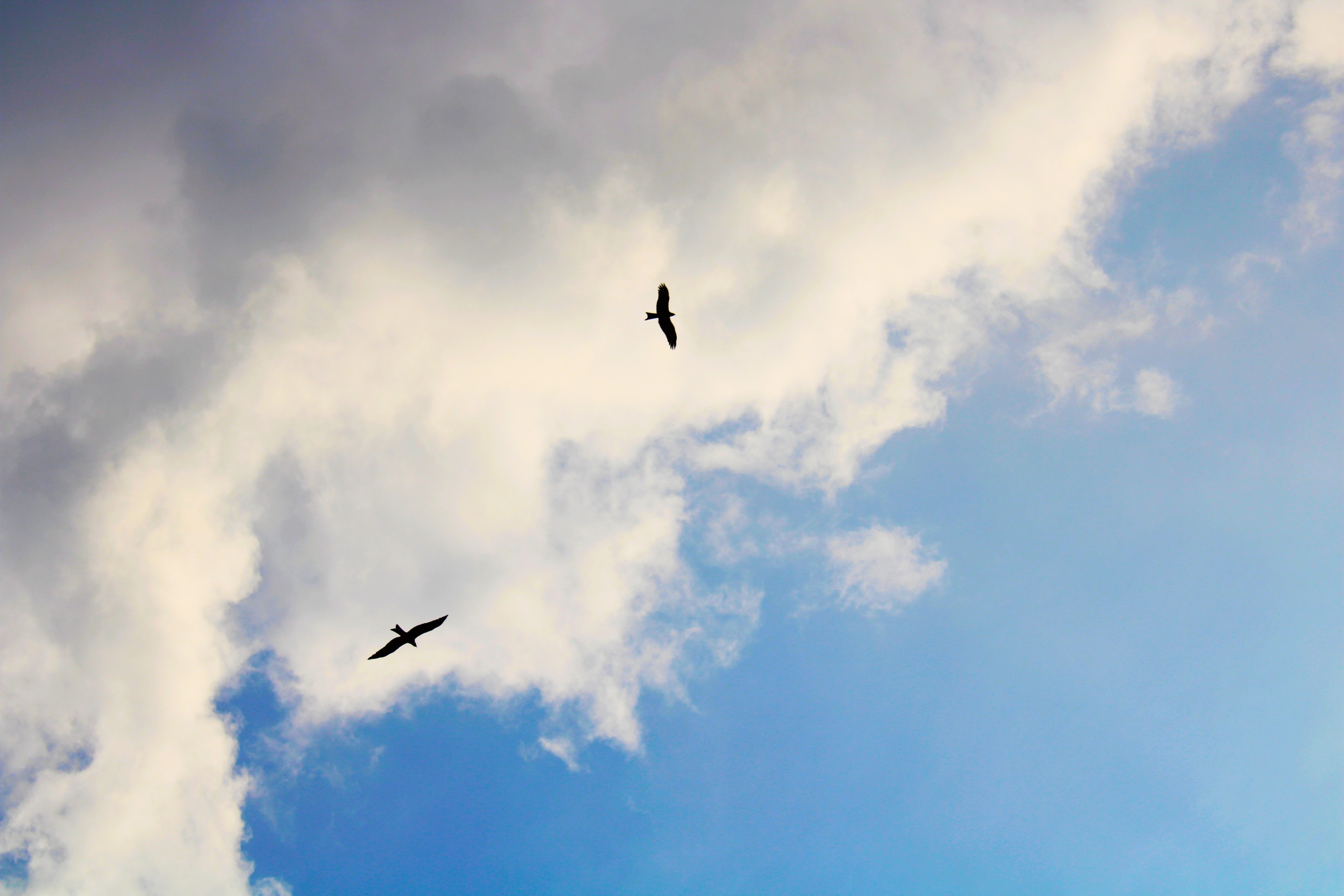 Two birds flying silhouette