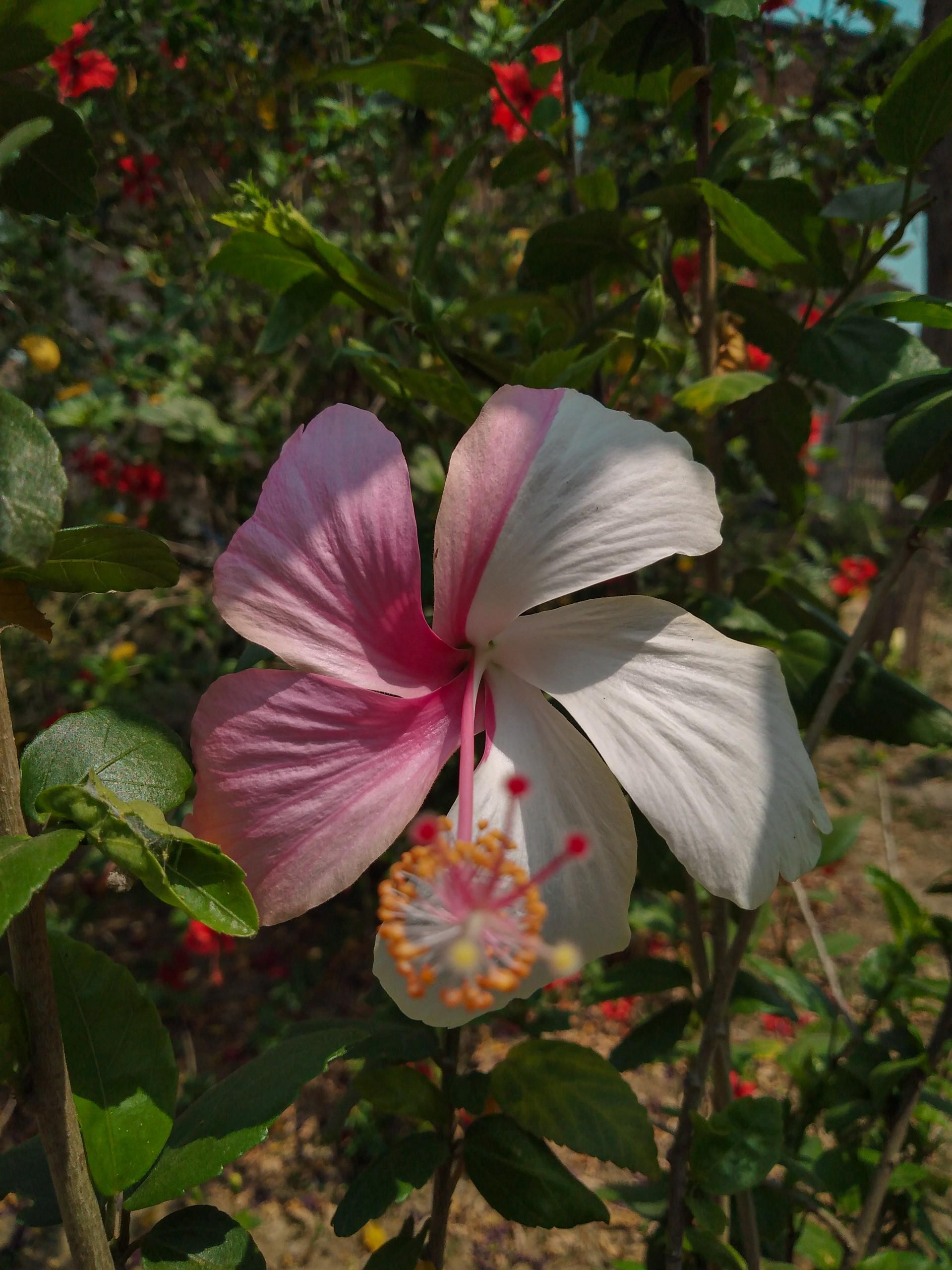 Unique two-coloured Flower