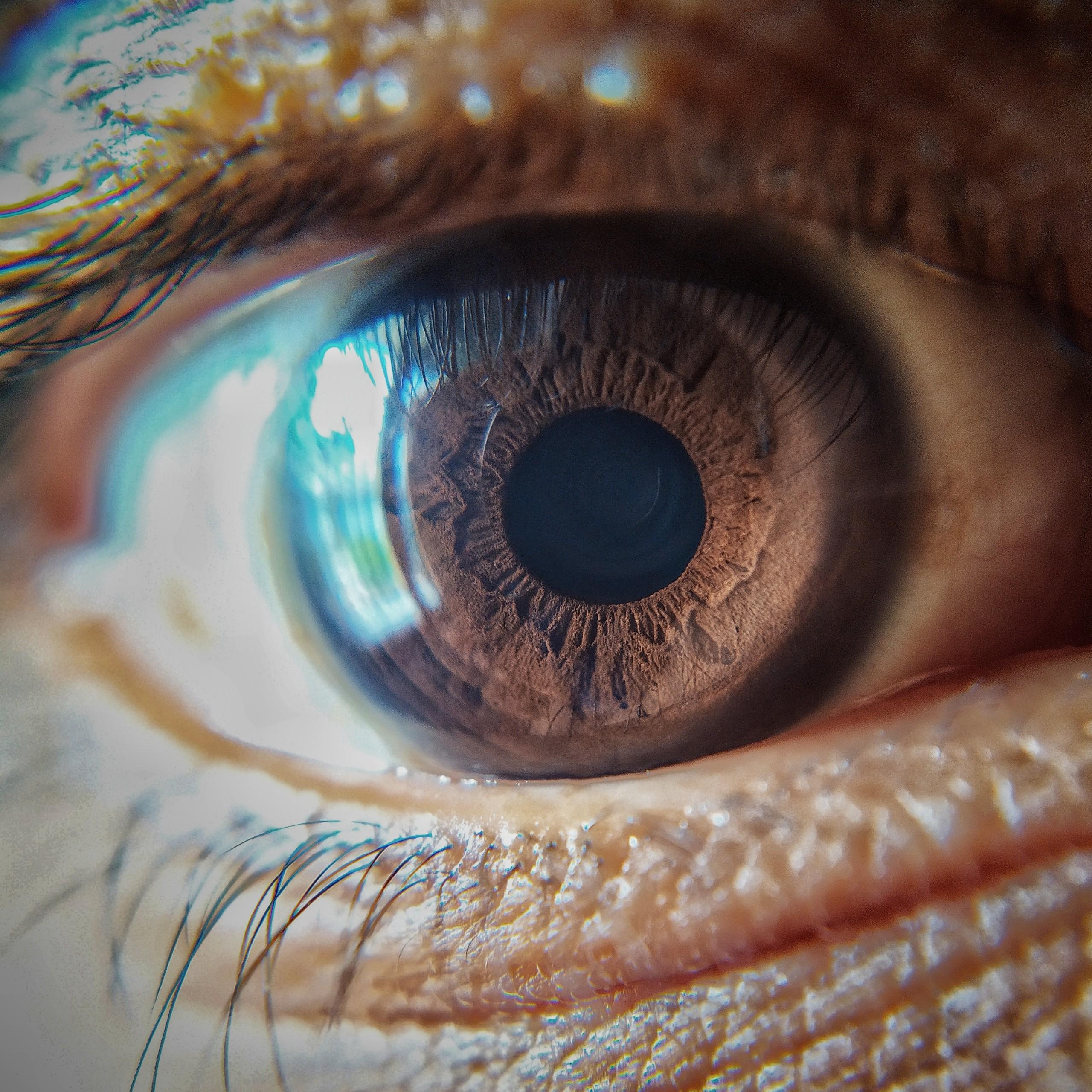 Eyeball and retina