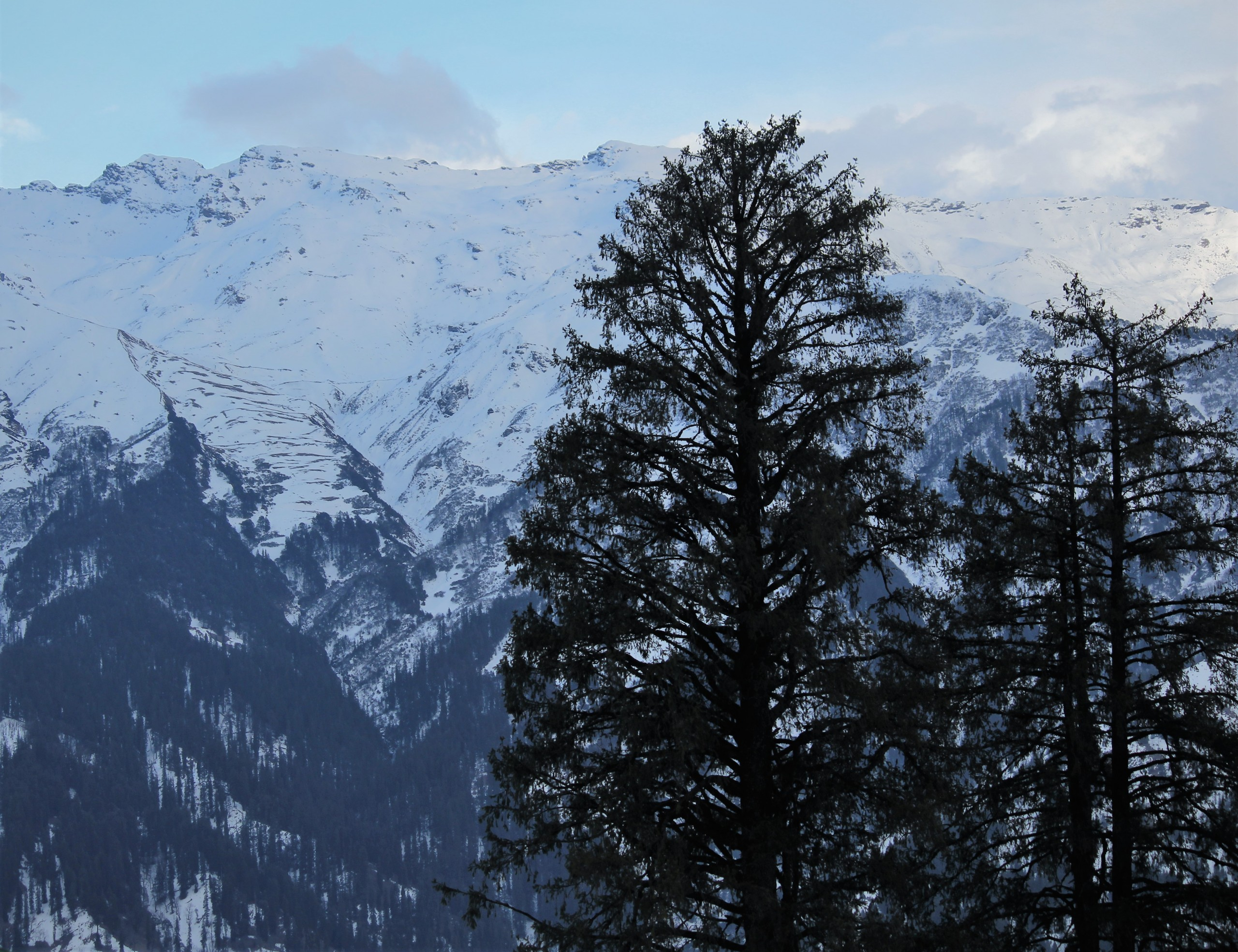 Snow-capped mountains and trees