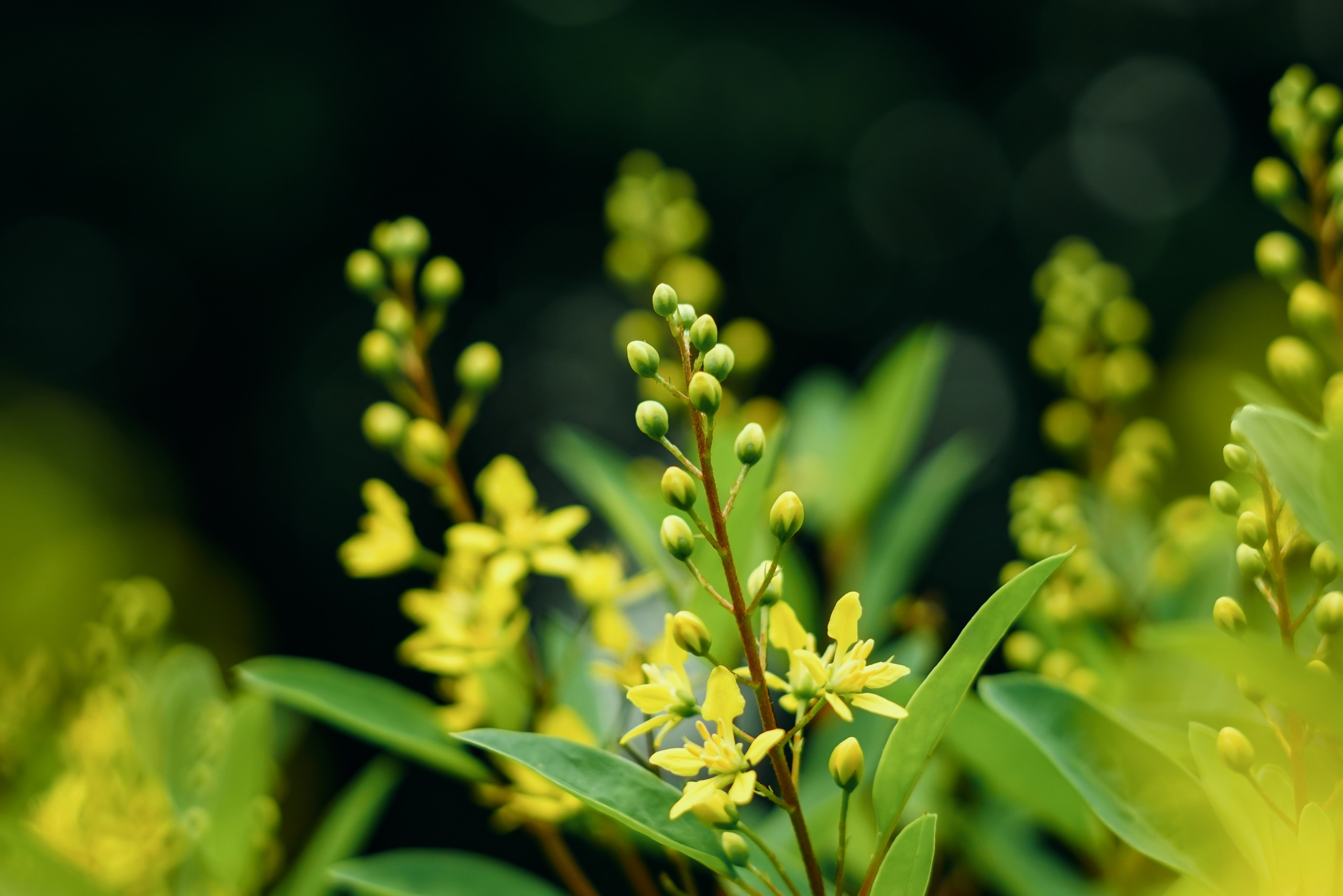 Yellow flowers and shrubs