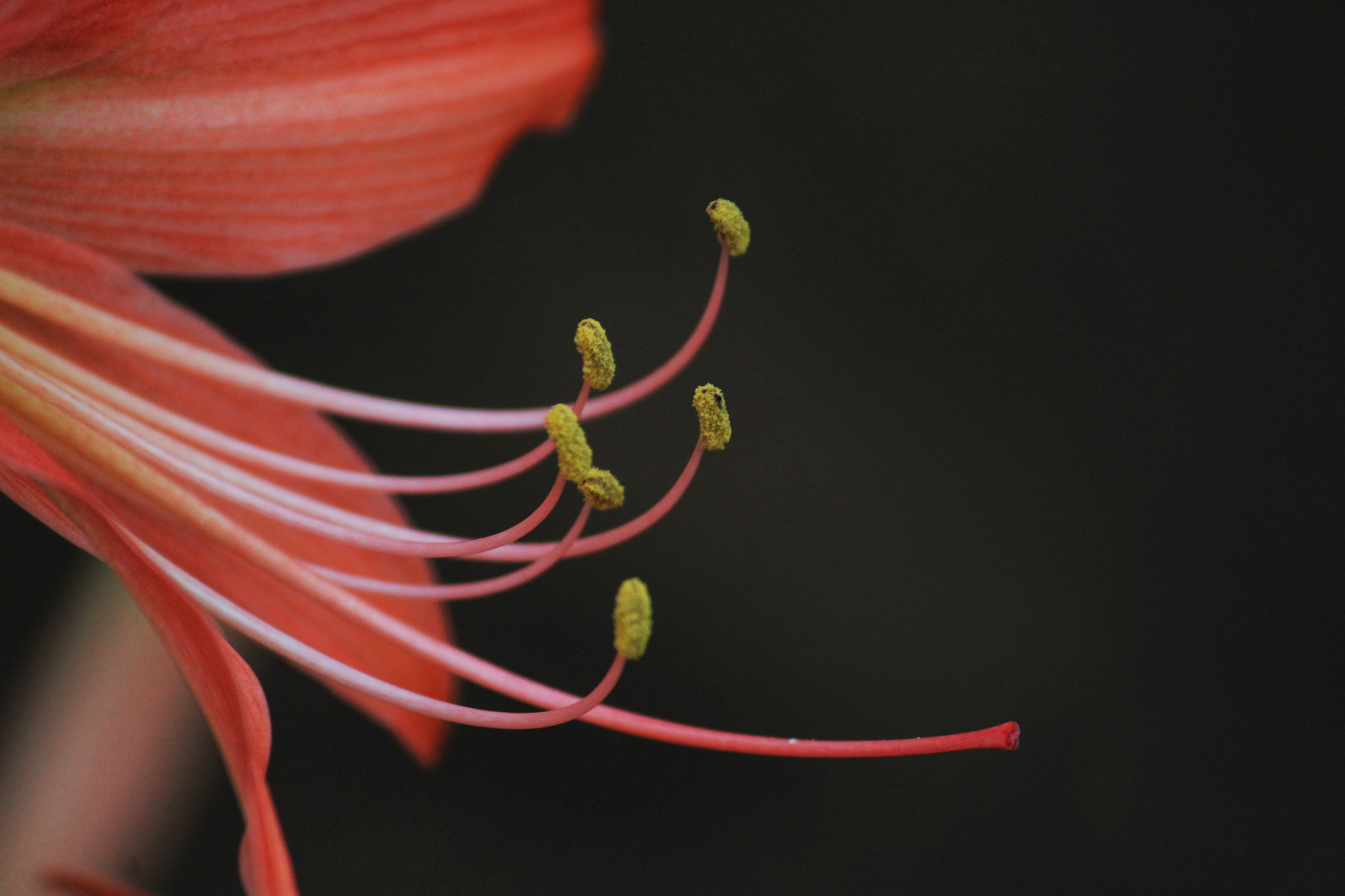 Anthers of Flower on Focus