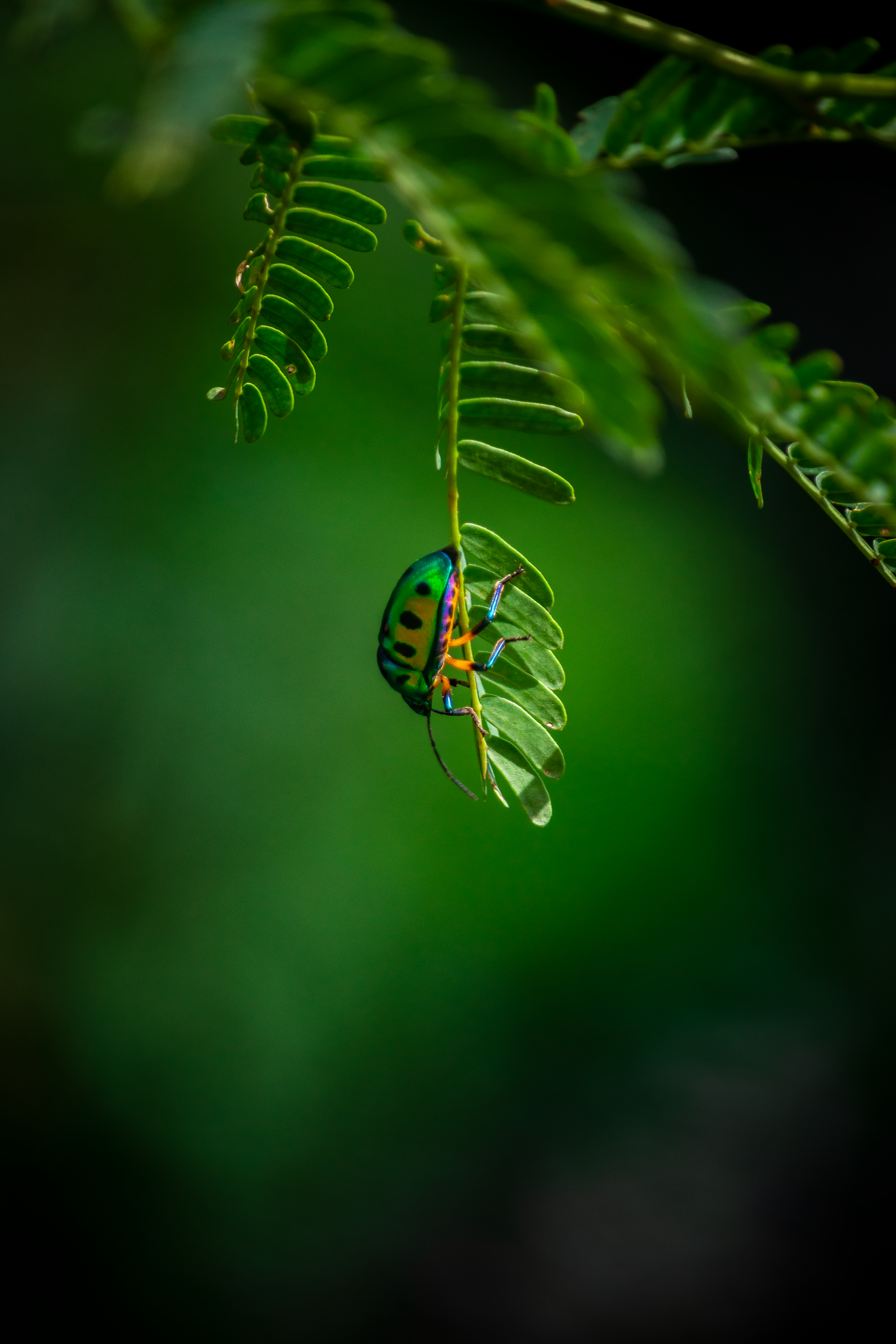 Colorful green Insect Close-up