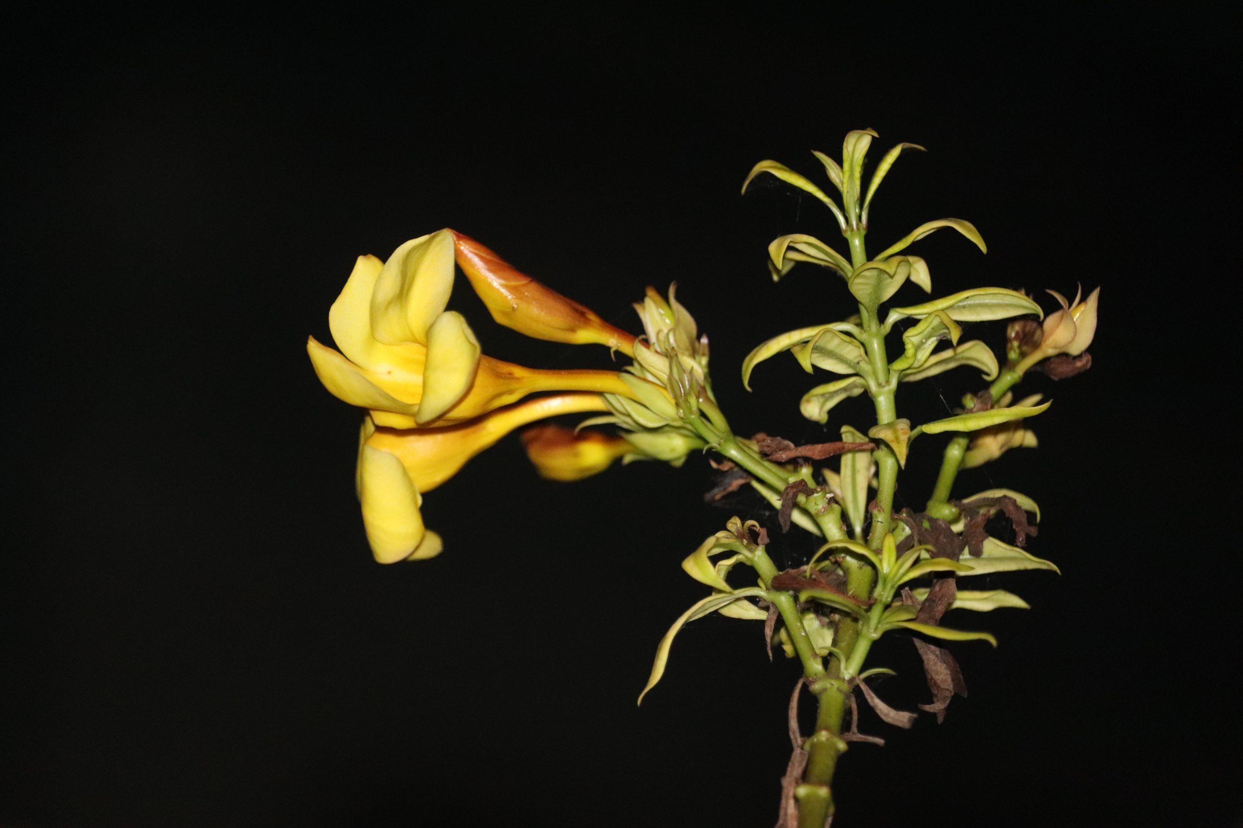 yellow flows with dark Background