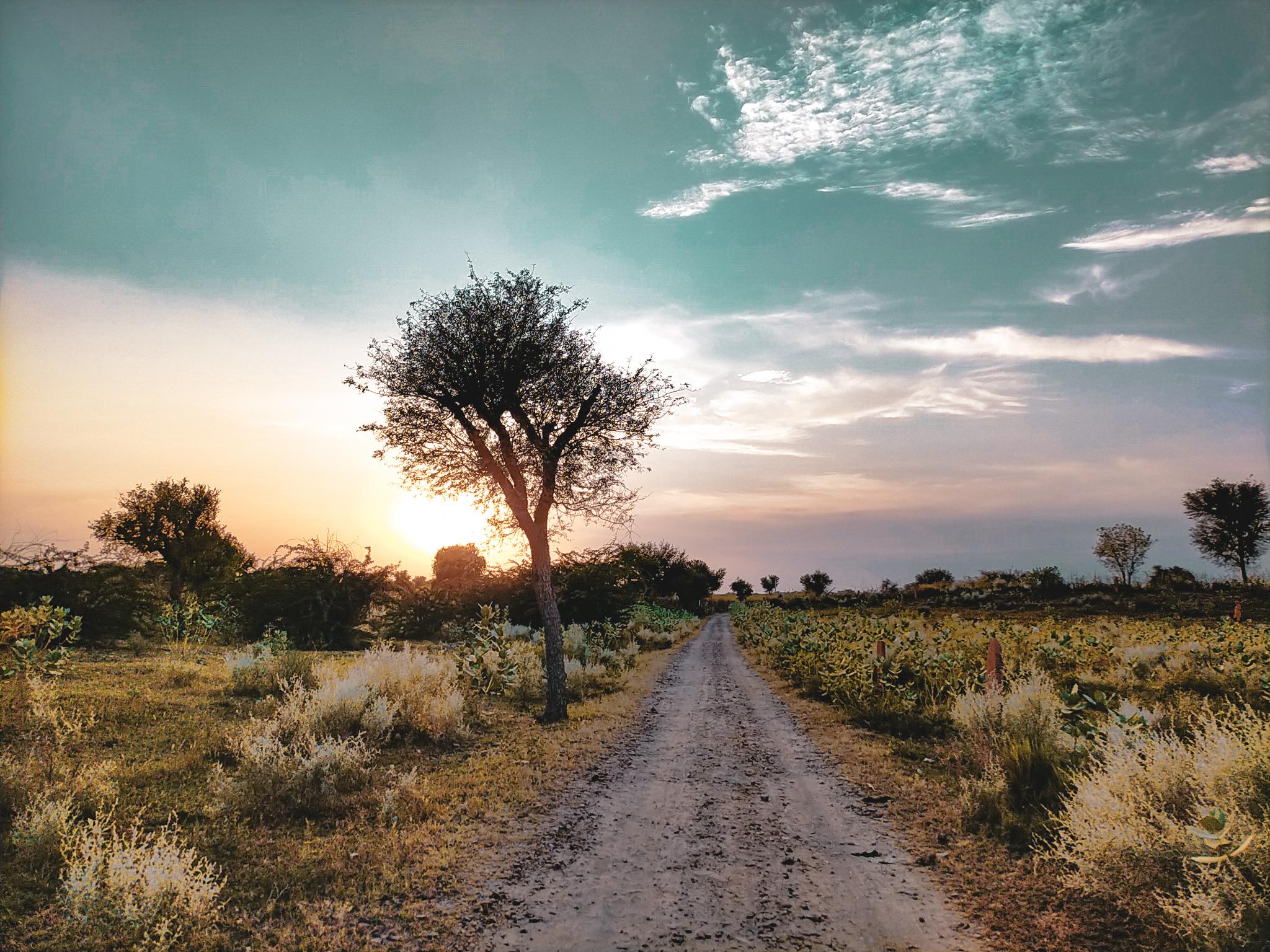 path amidst wilderness