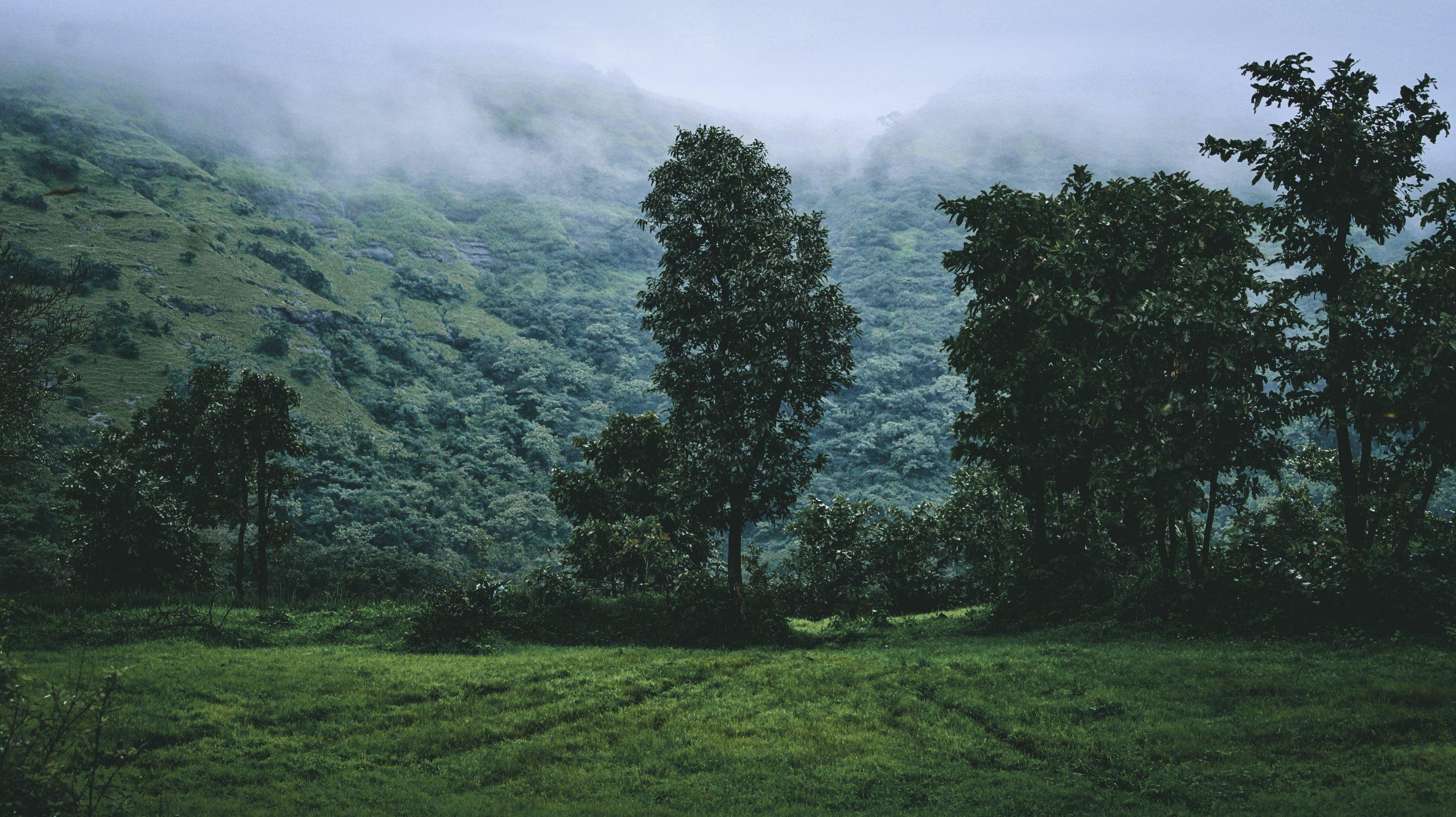 Green Foggy Landscape