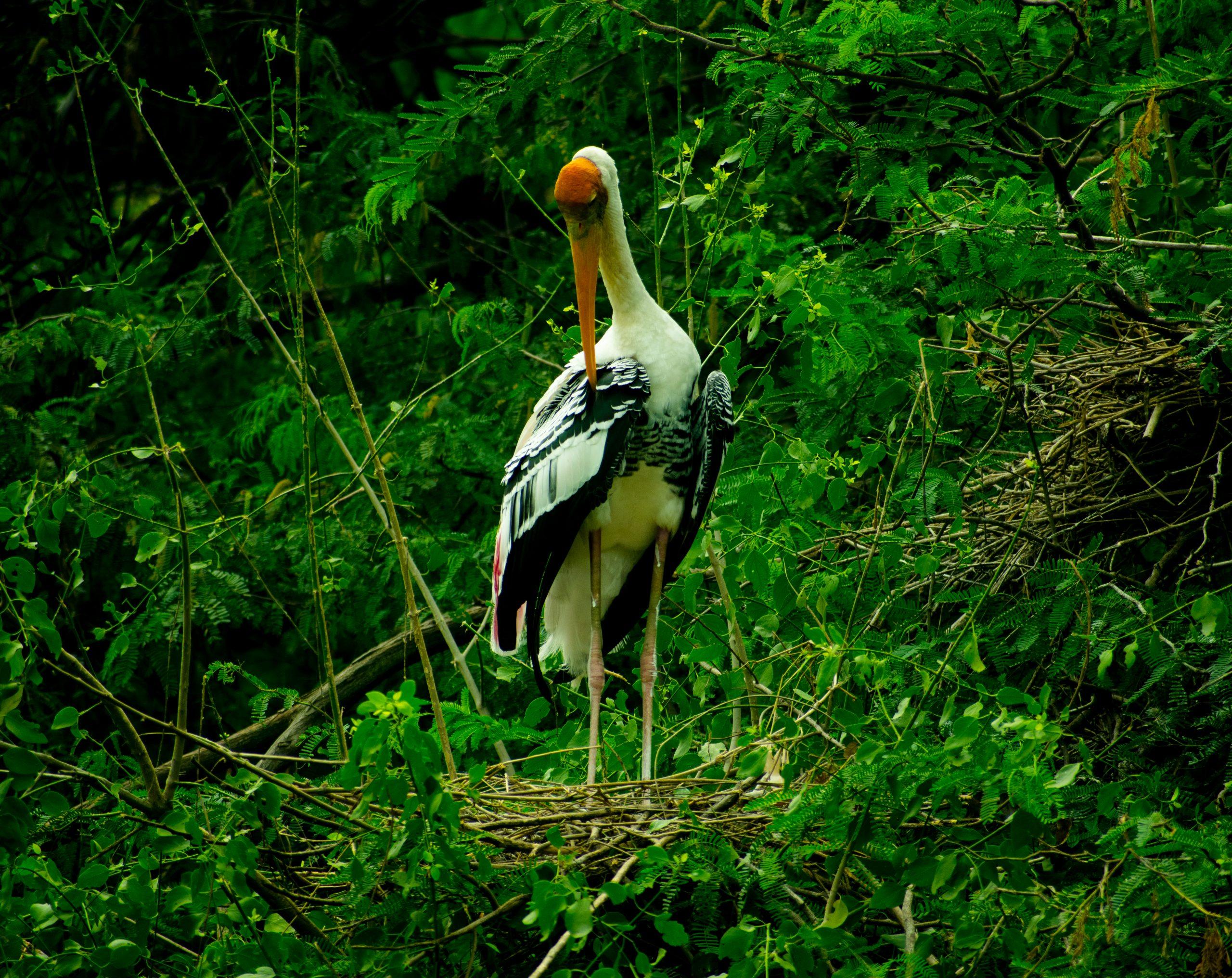Stork on a tree