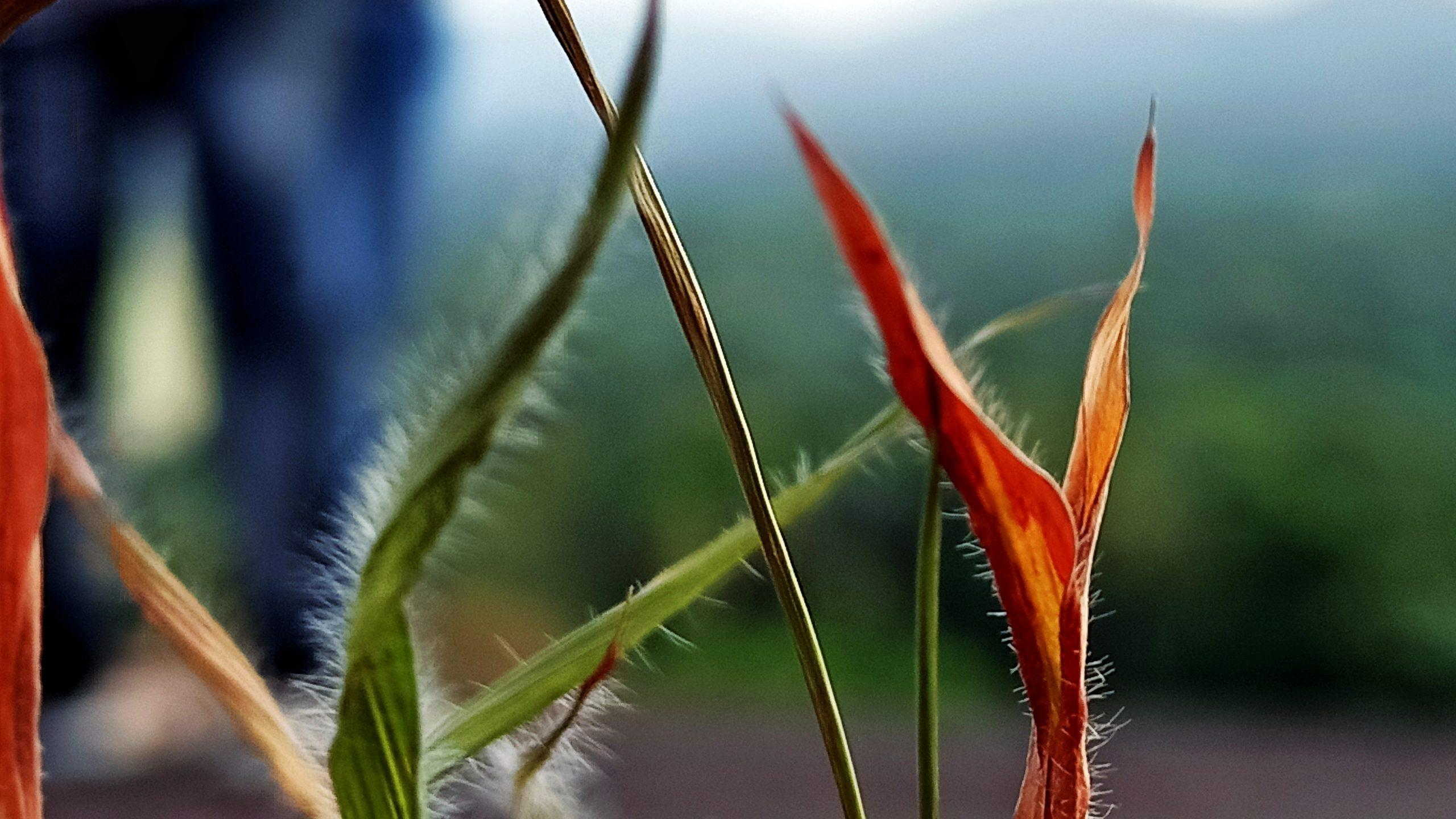 Grass Leaves on Focus