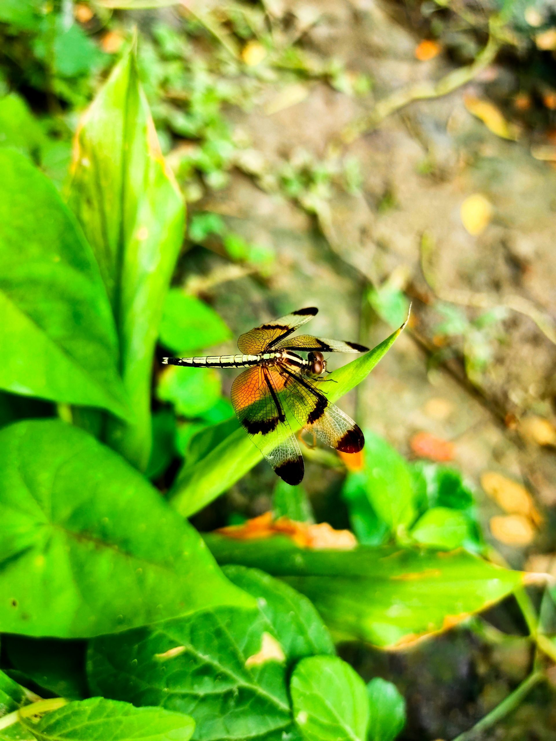 A Beautiful Dragonfly