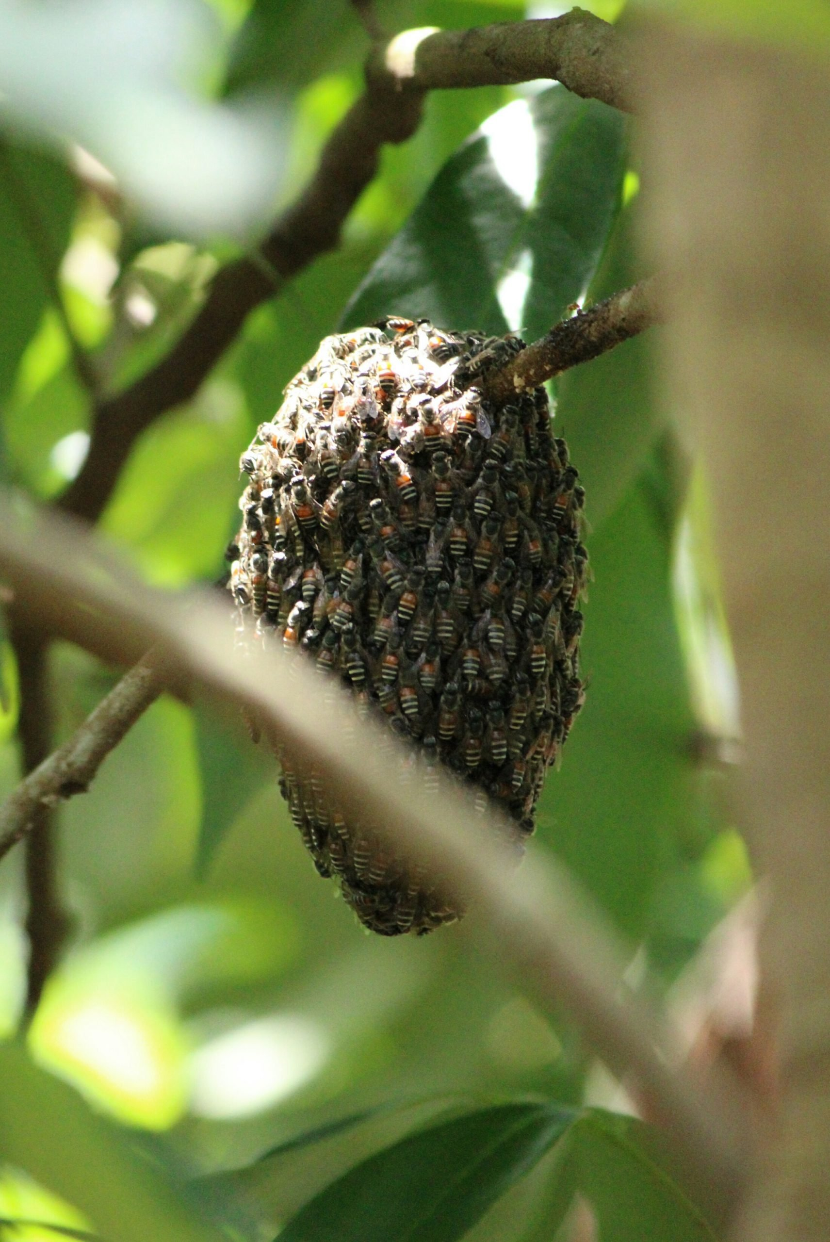 A Beehive on a Tree