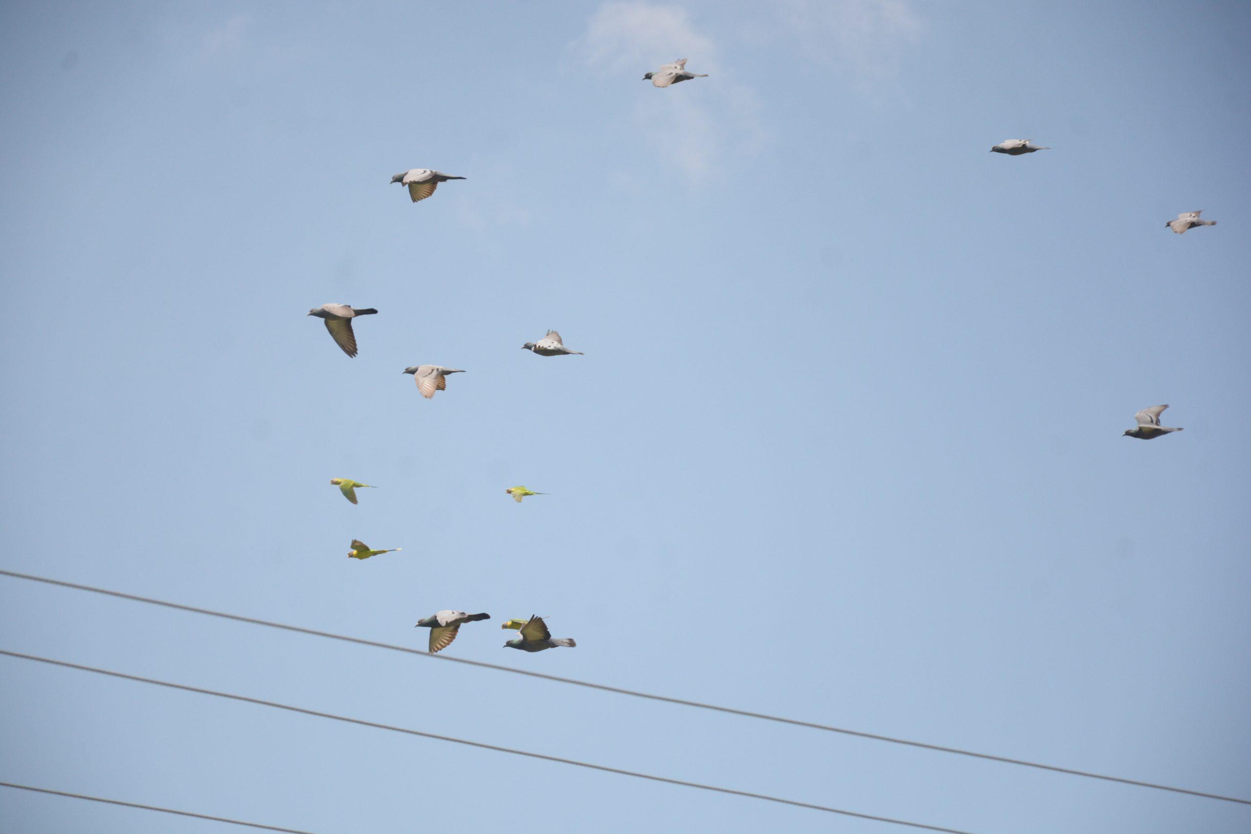 A Bird Migration on the Sky
