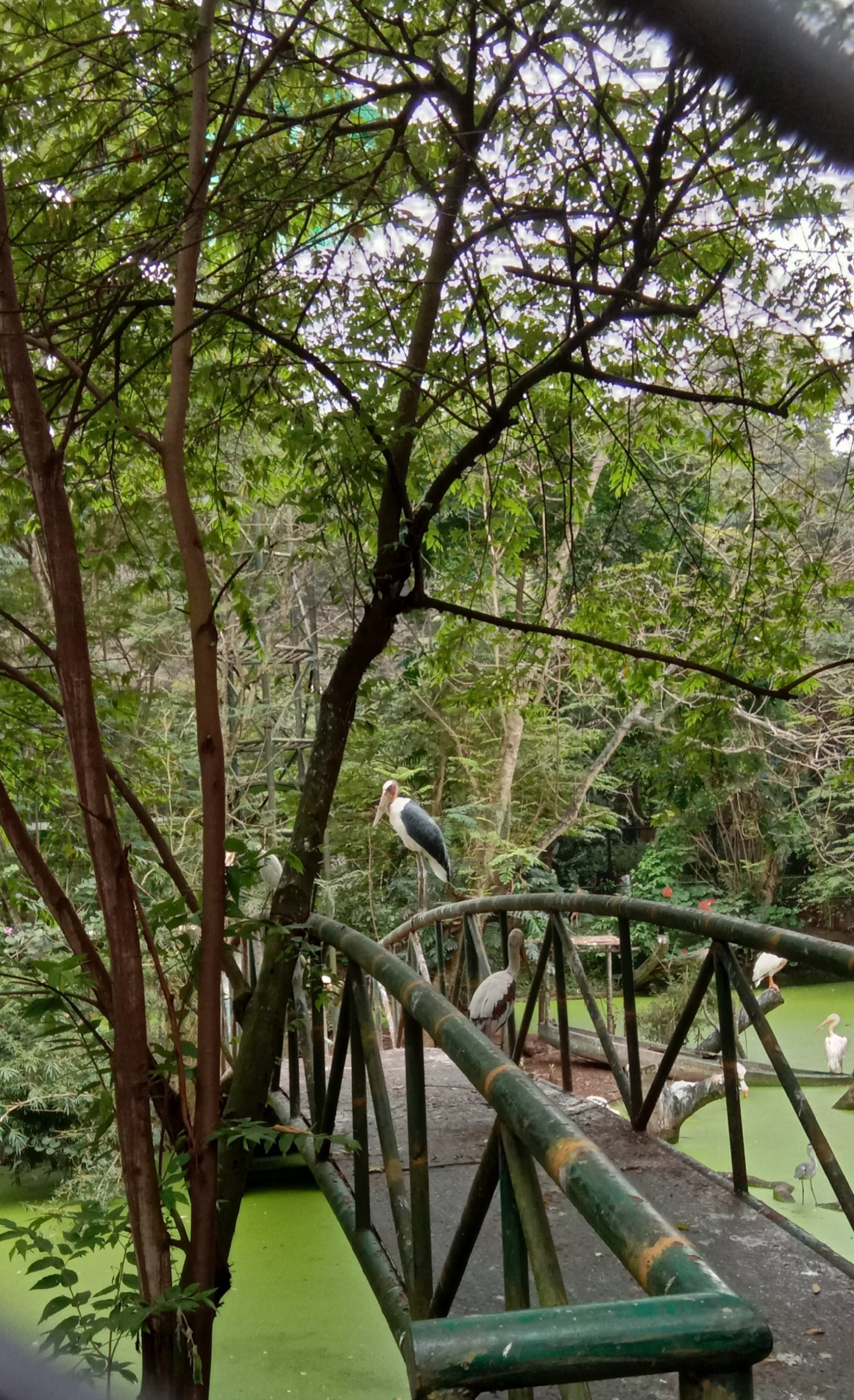 A Bridge on a Greenery Forest