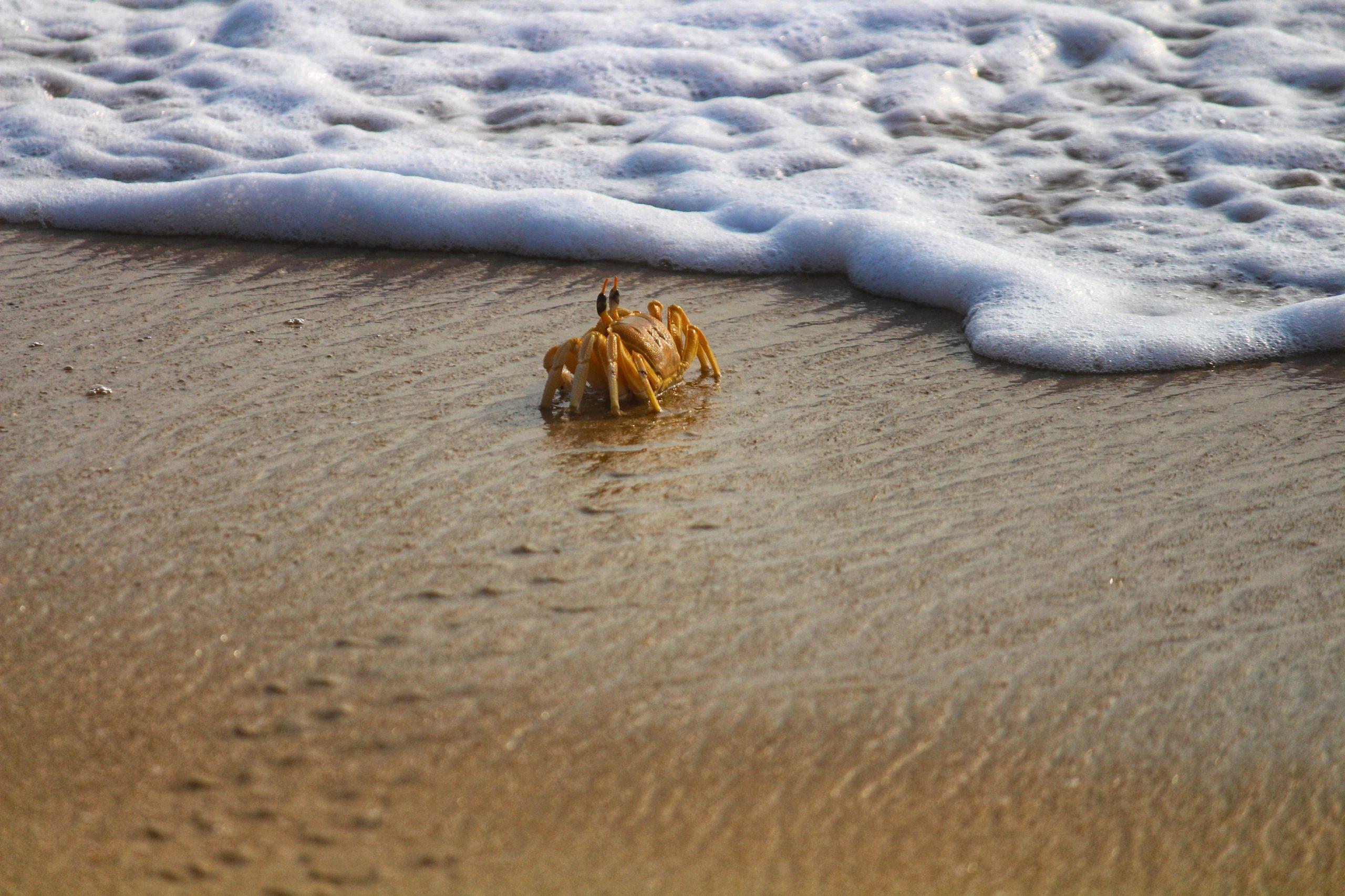 A Crab Photo Taken Along the Shore