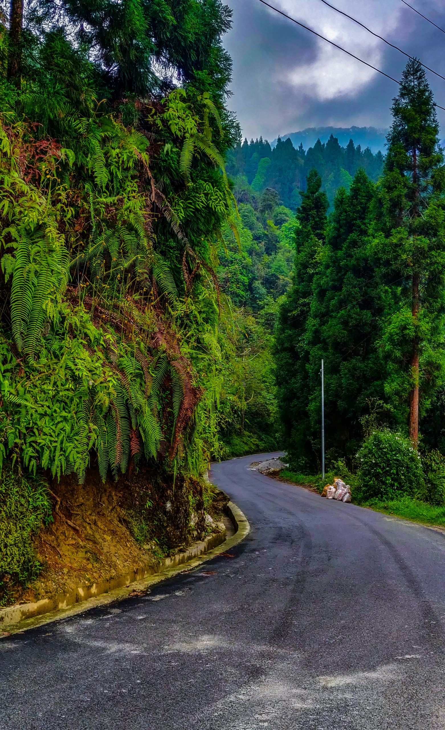 A Road in a Tropical Forest