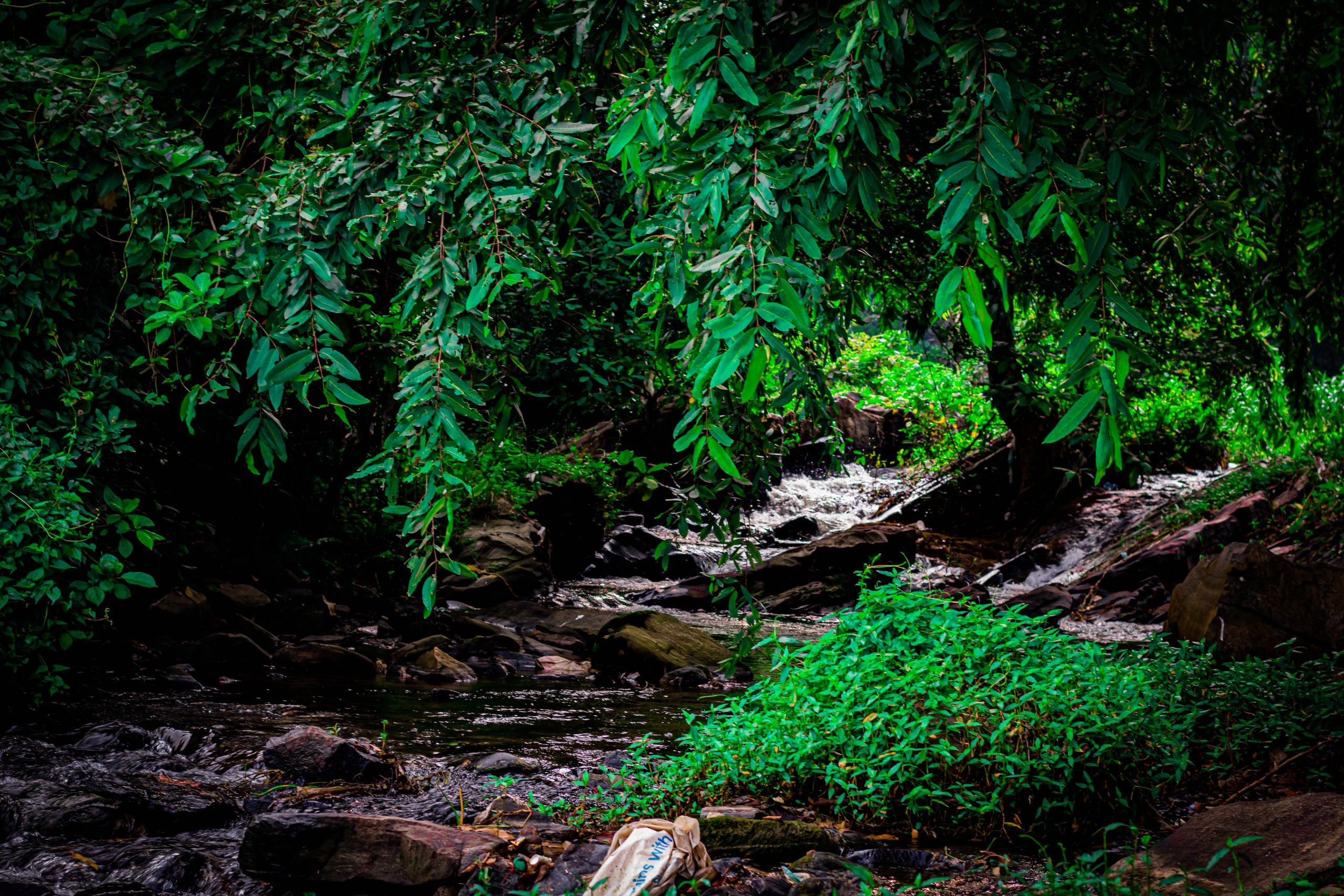 A Stream in a Forest