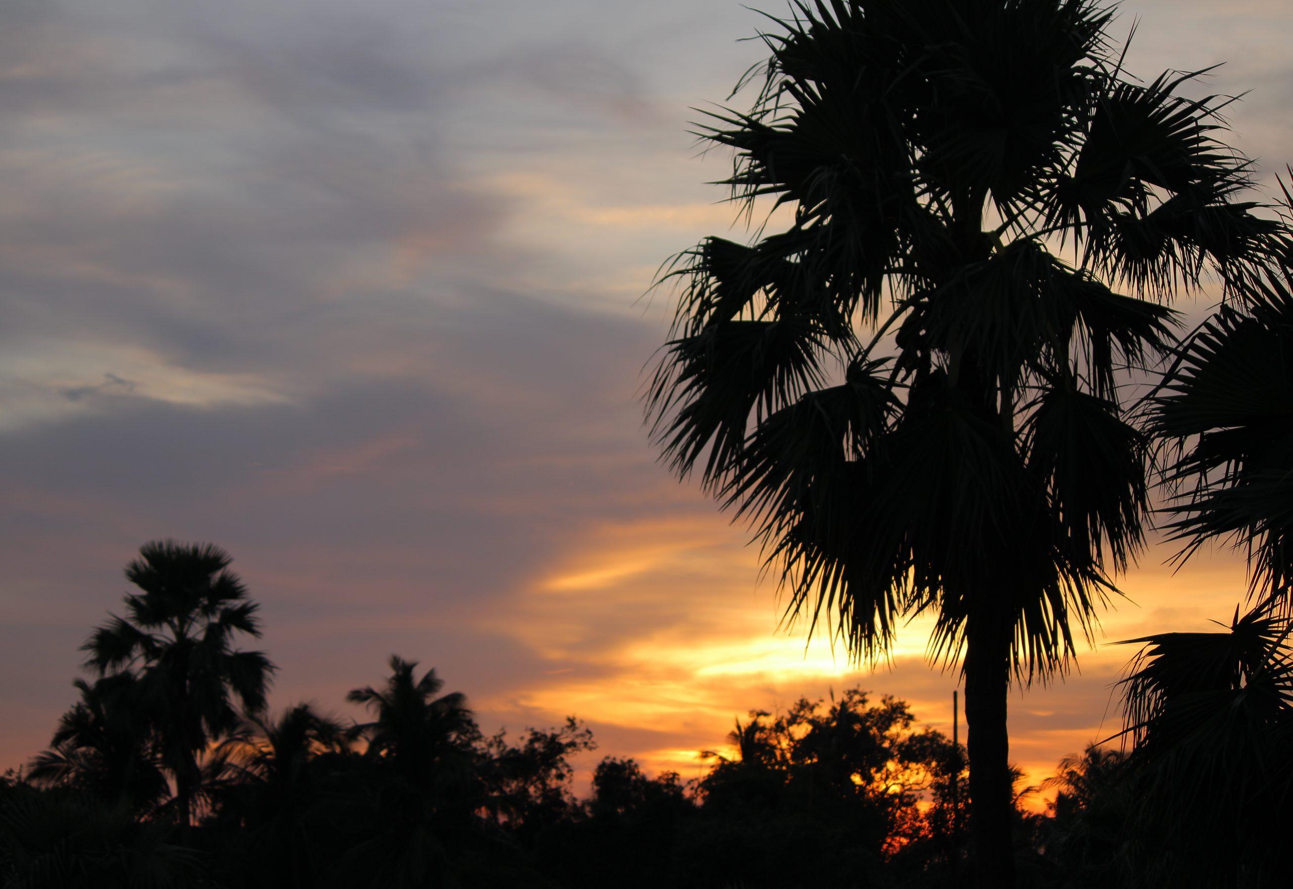 A Sunset Shot Behind A Tree