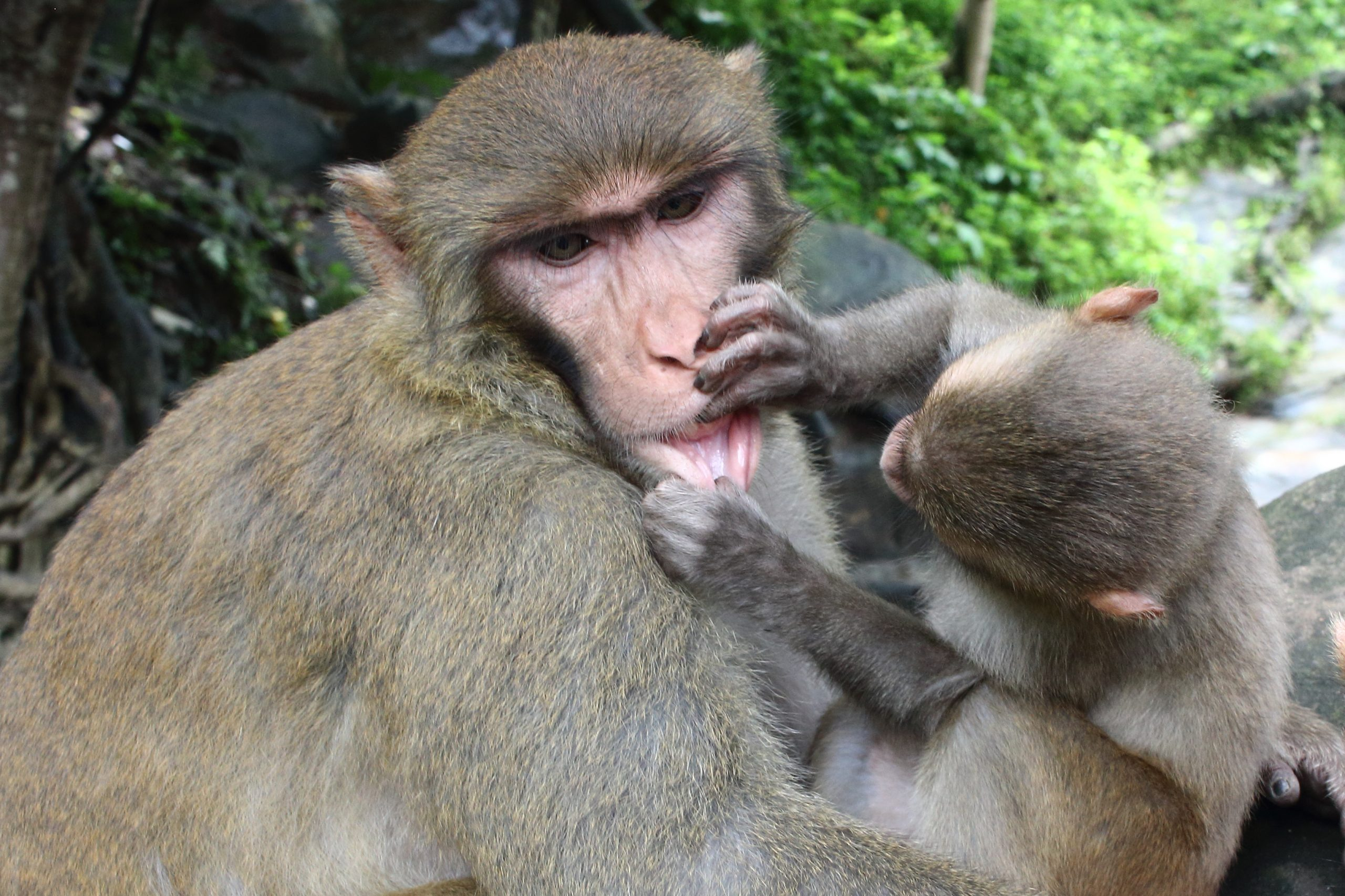 A baby monkey with mother