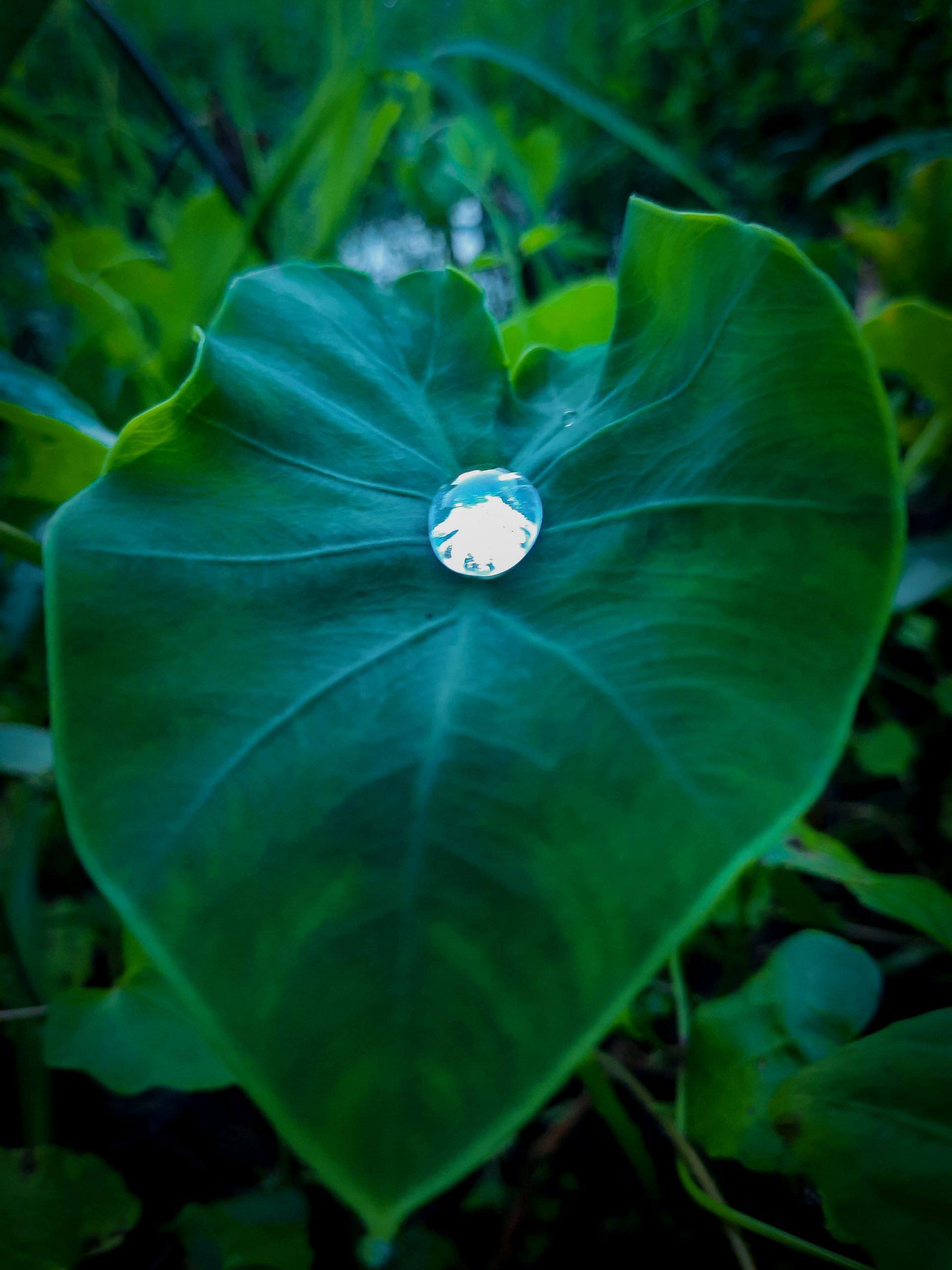 A beautiful water droplet on leaf