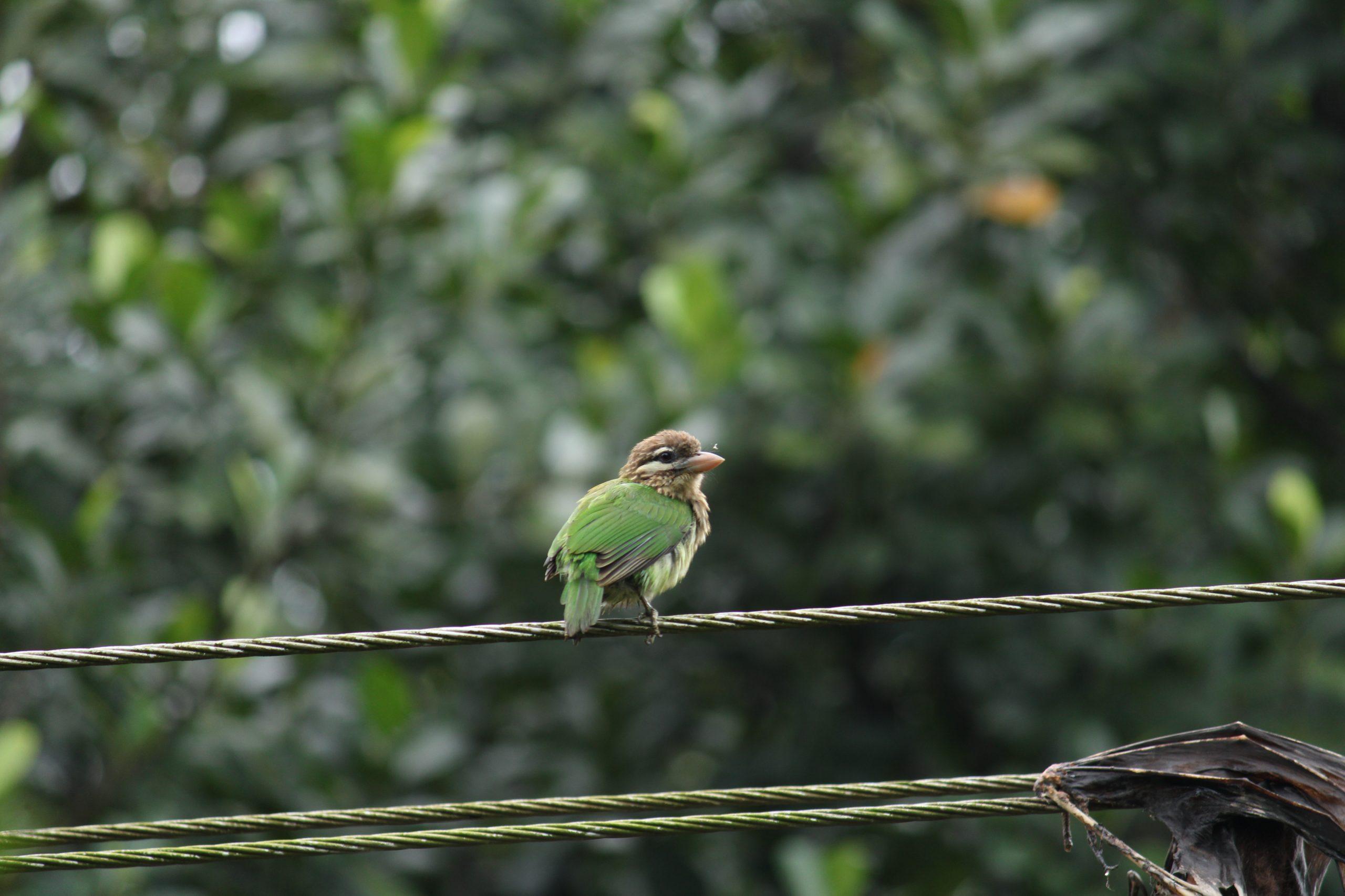 a tiny bird sitting on a wire