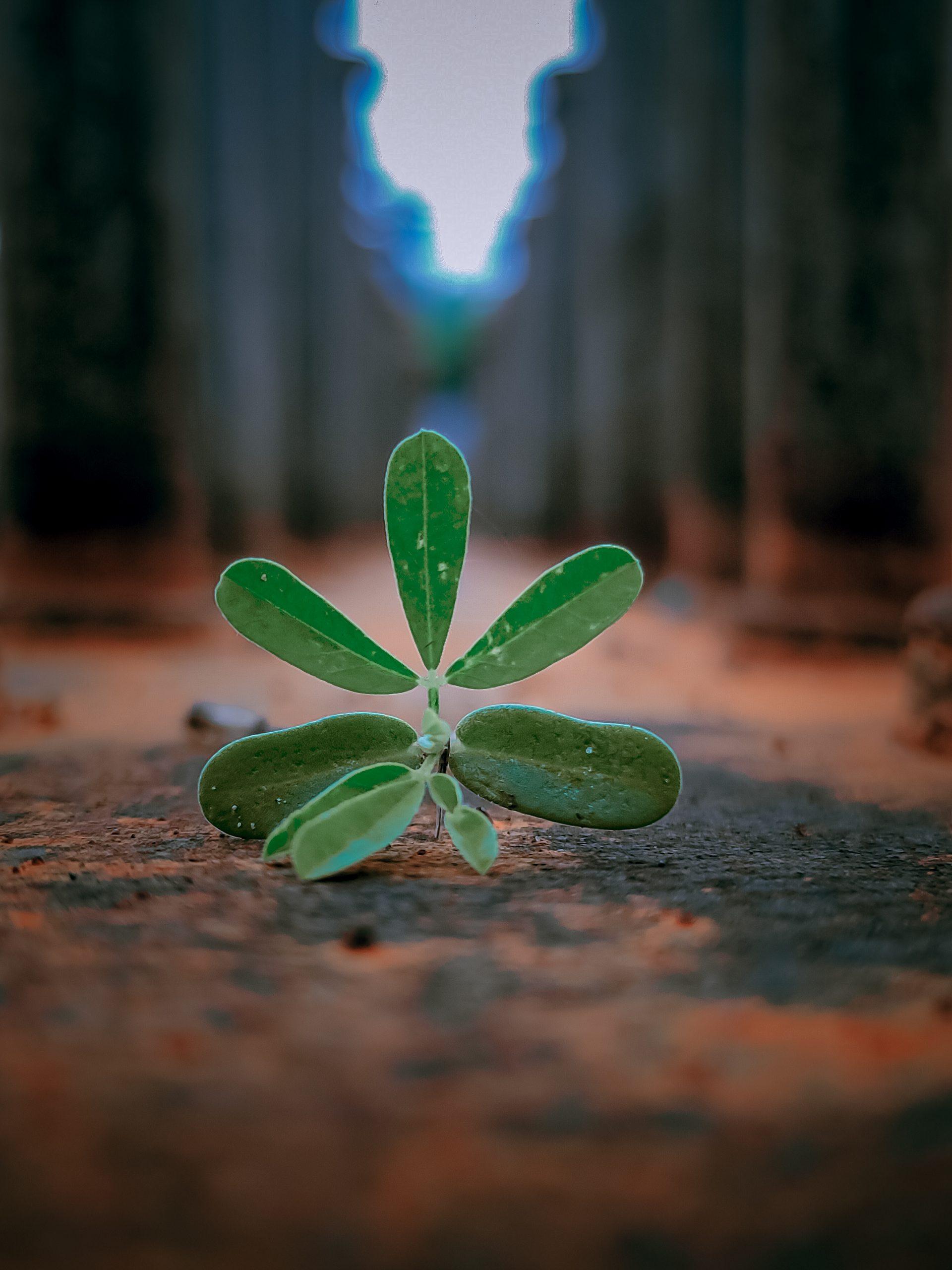 A broken small plant