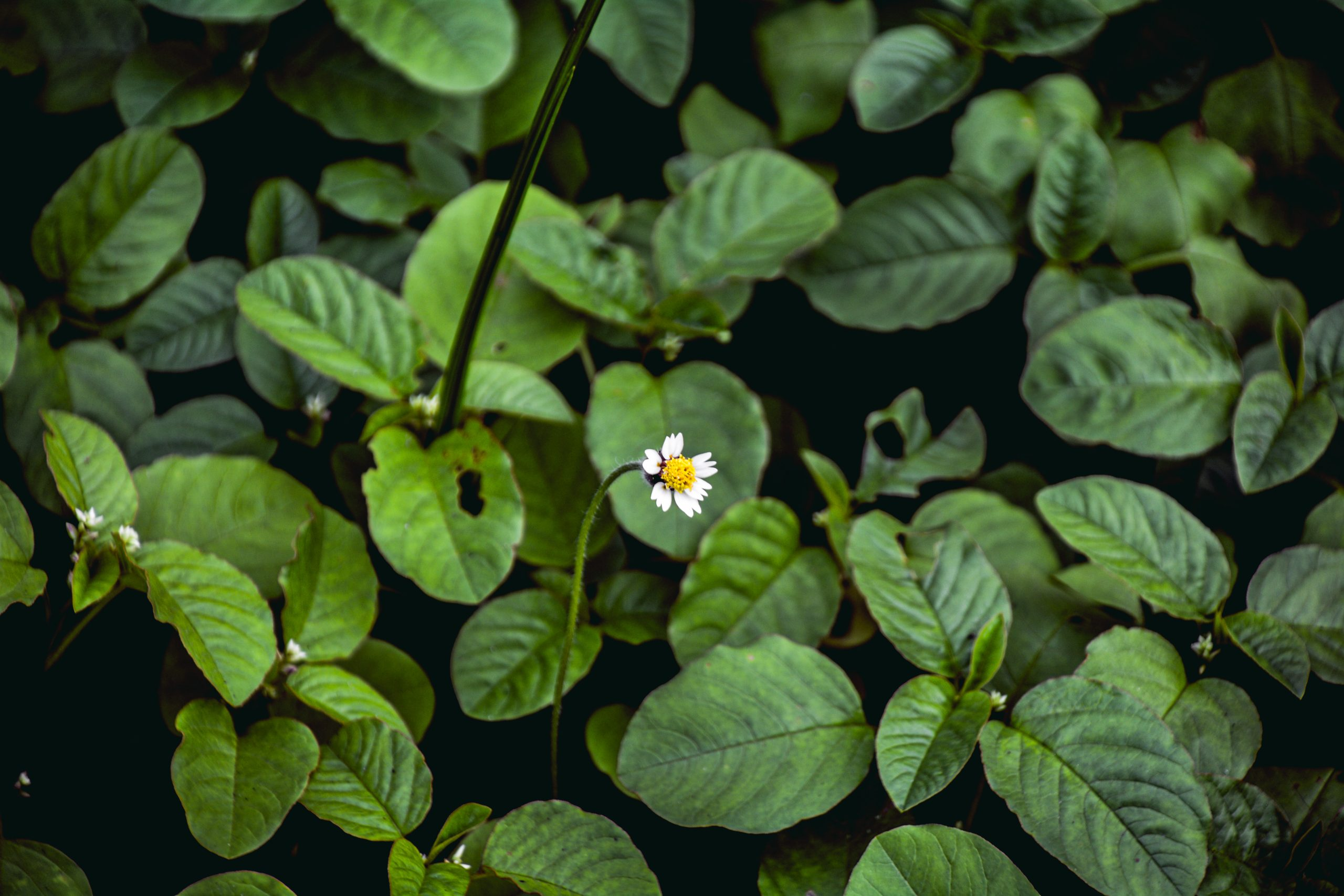 A cute White Flower in the Plants