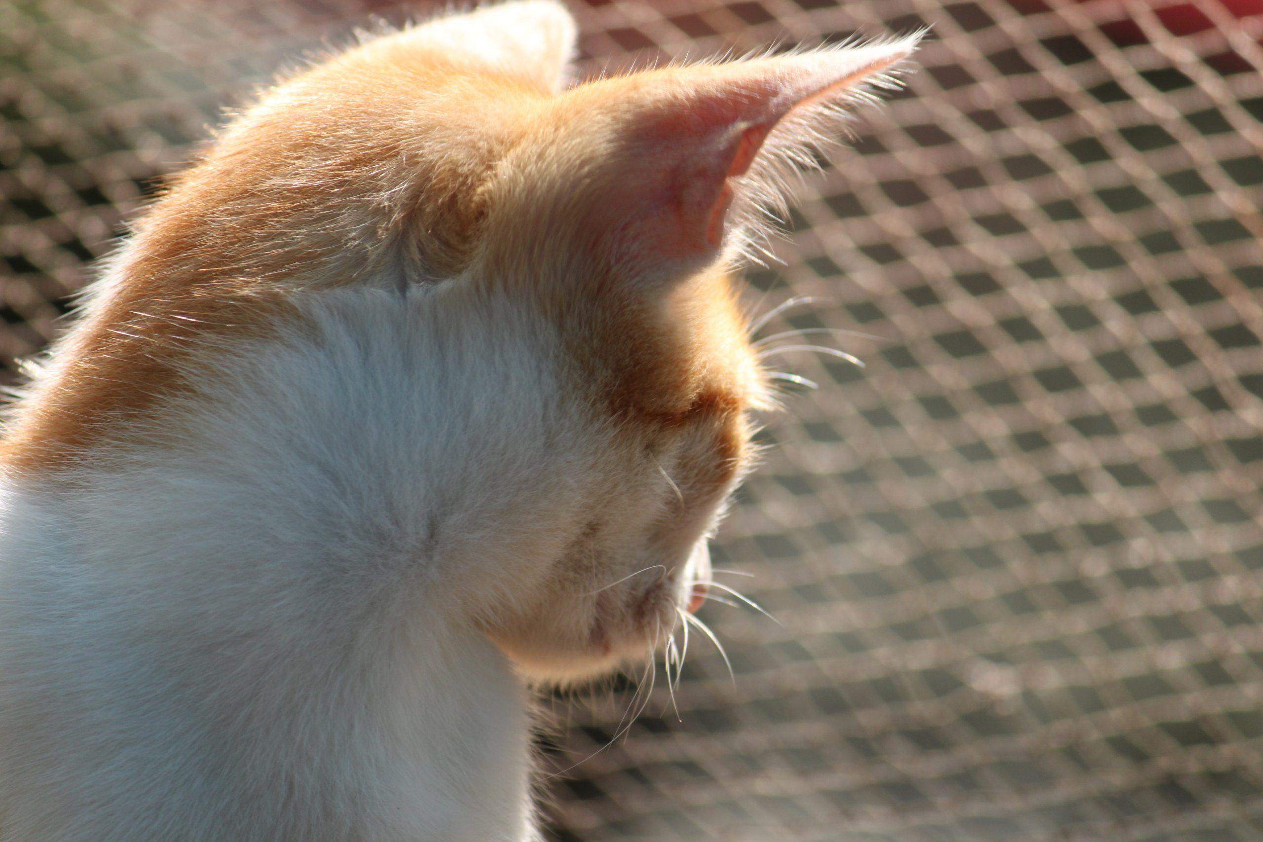 A cute cat.