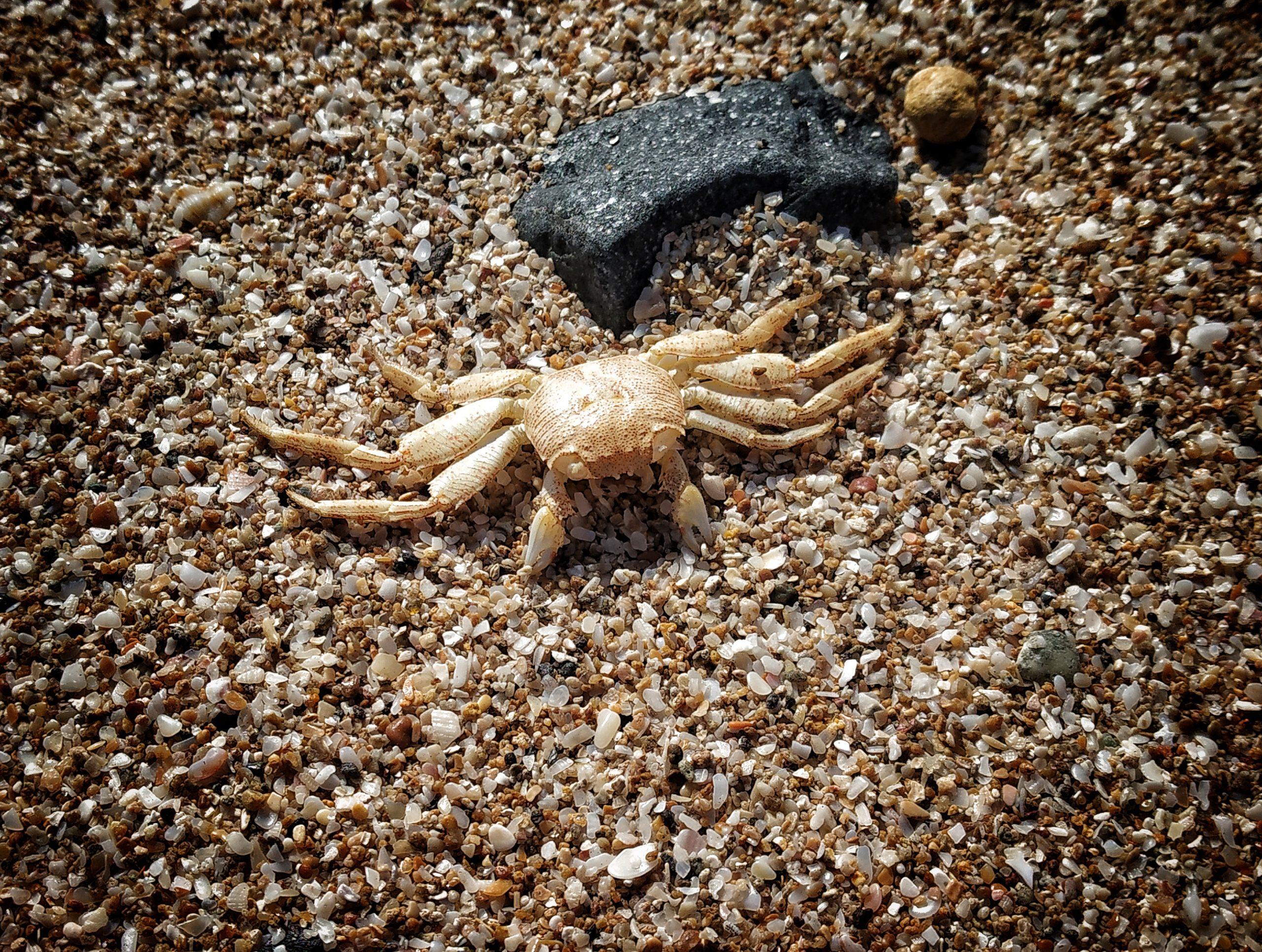 A dead crab at sea shore.