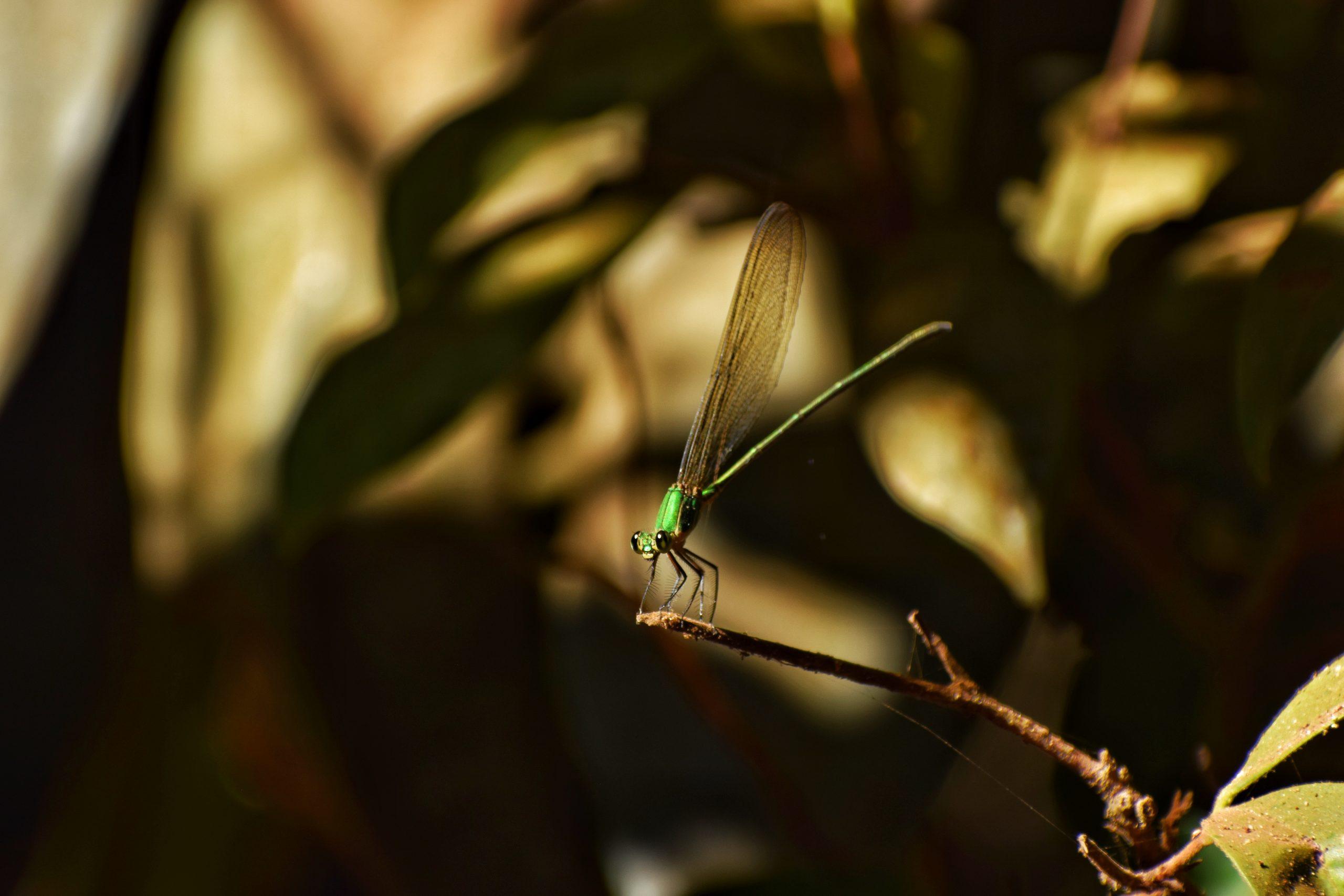 A dragonfly on a straw