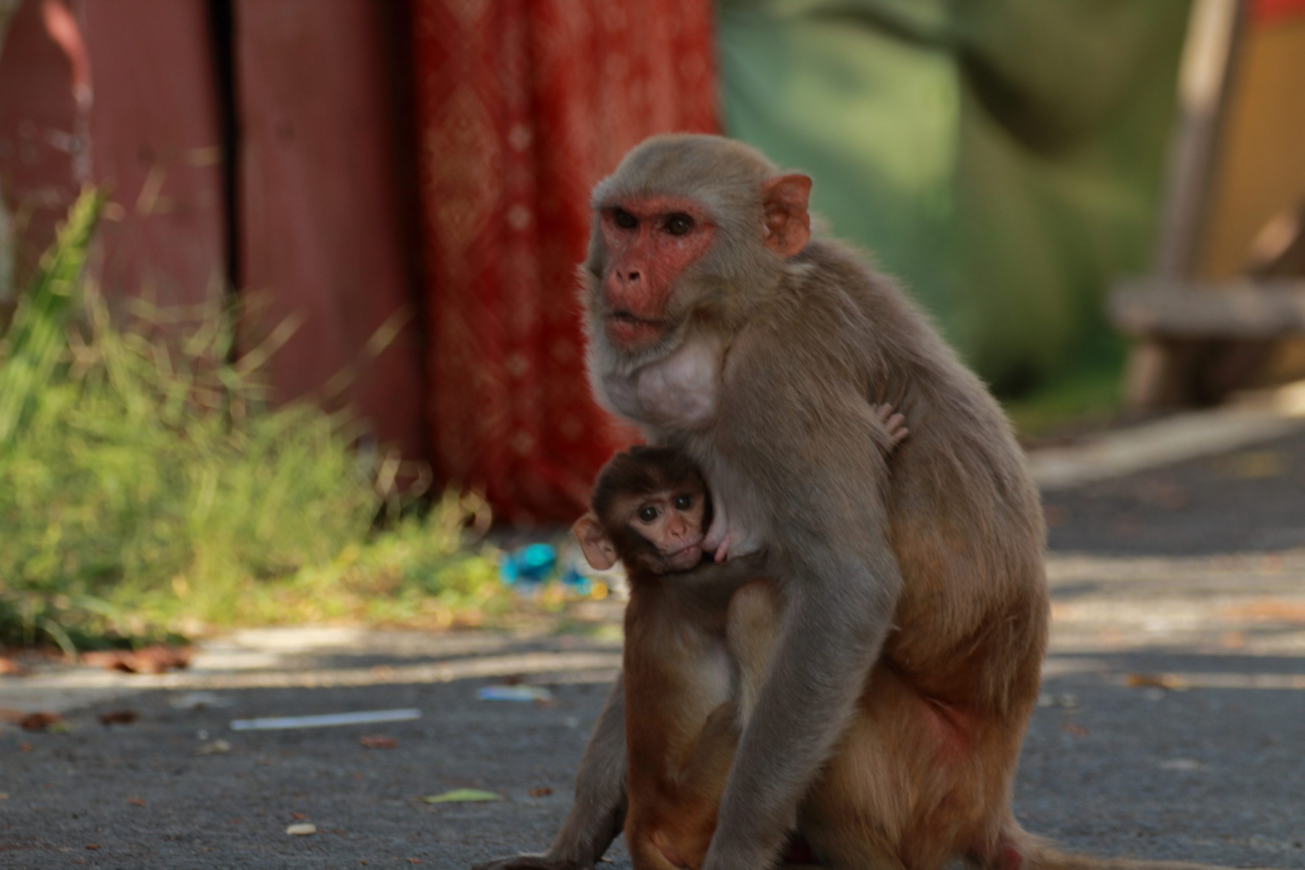 A female monkey with her baby