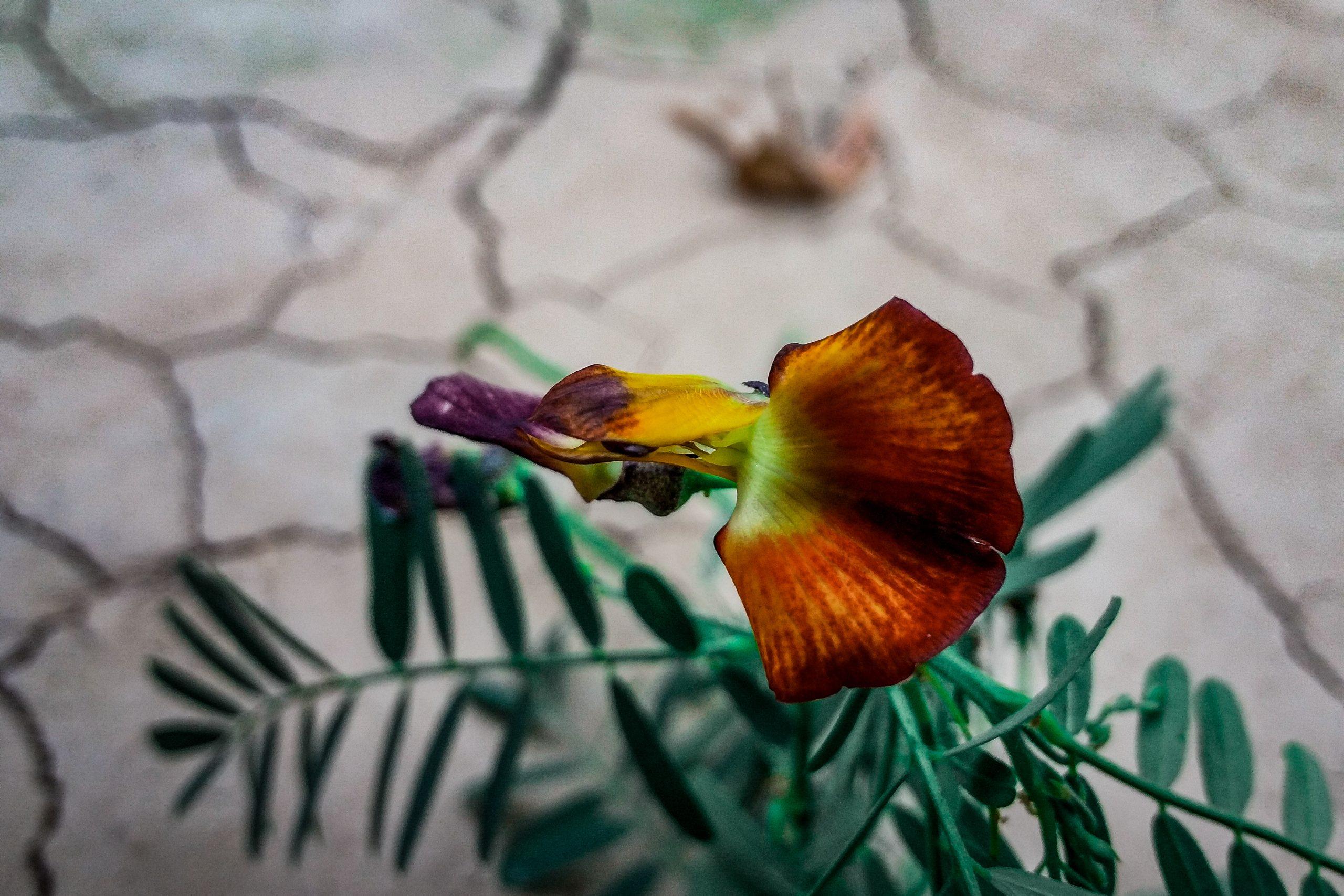 A flower petal close-up shot
