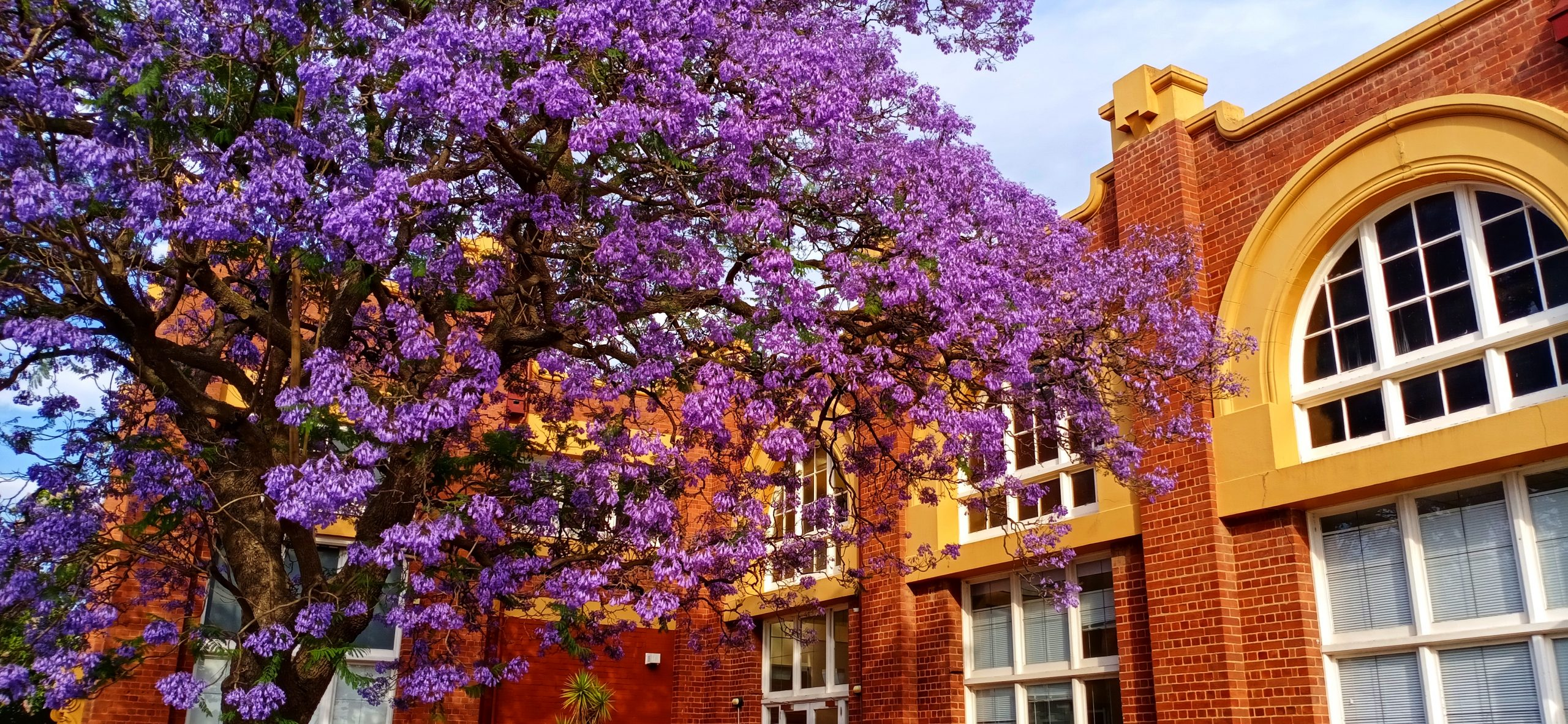 Tree with a Purple Flower