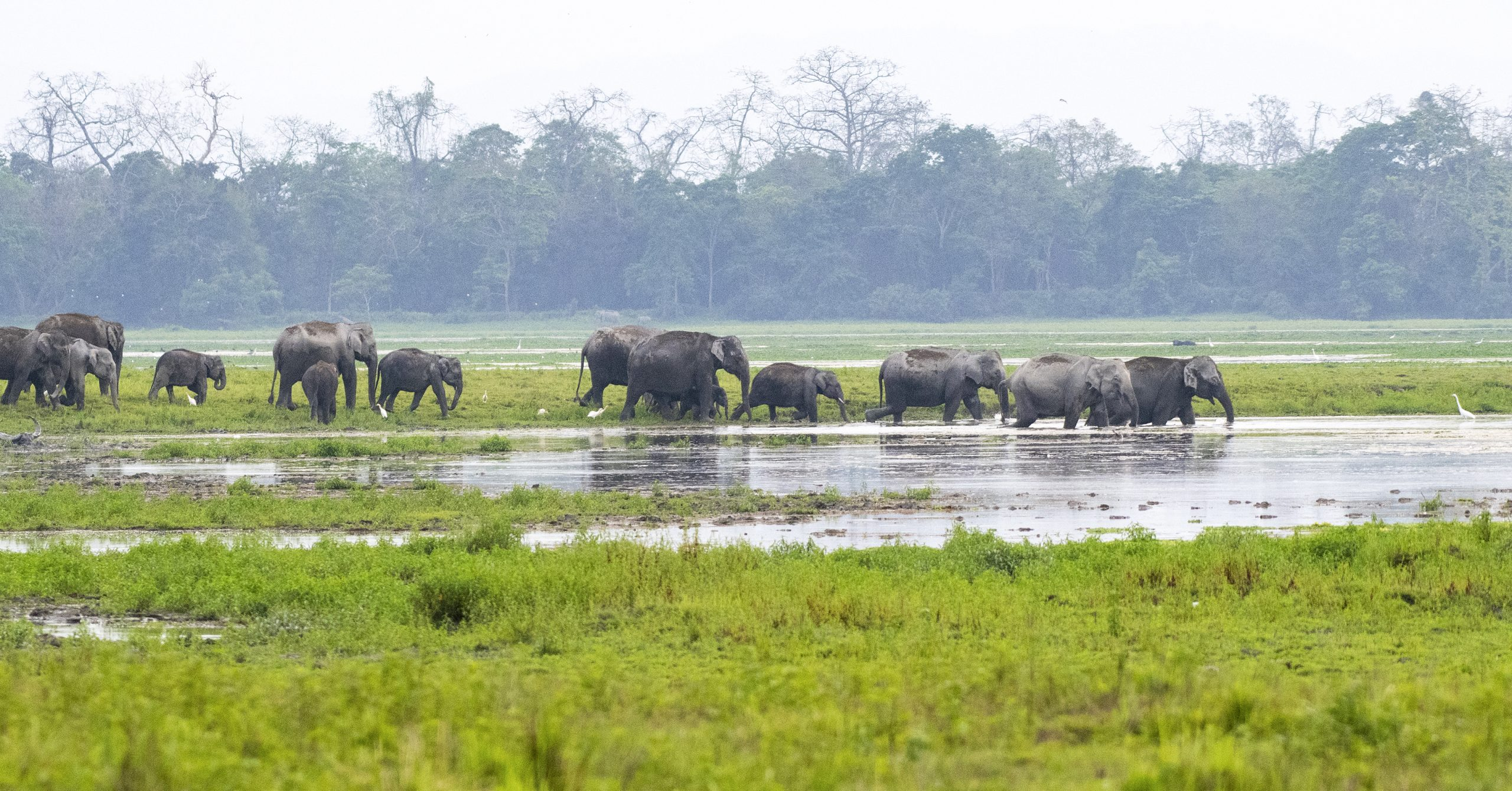 The Marchpast of Asiatic Elephant.