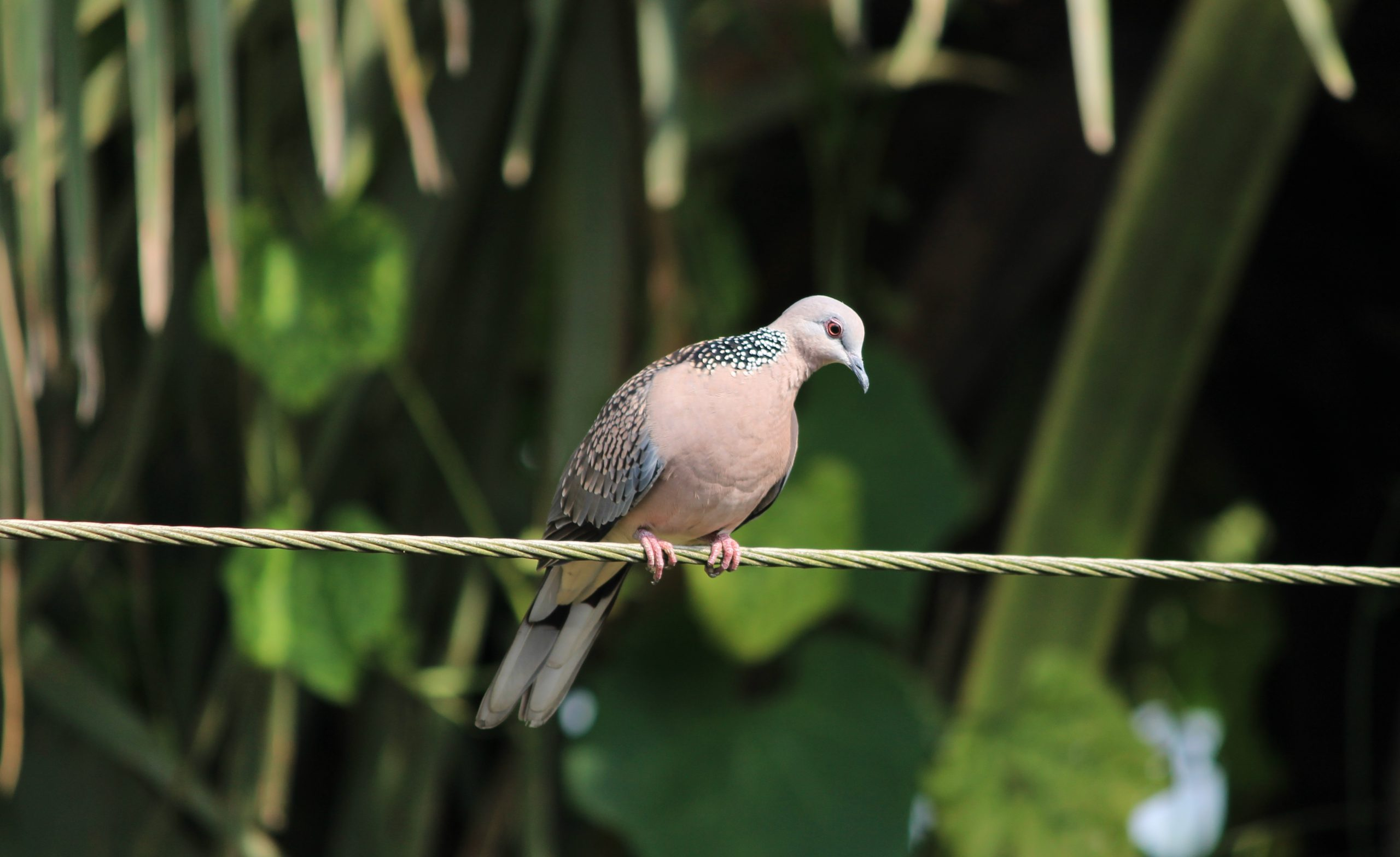 A lovely bird alighted on the rope line