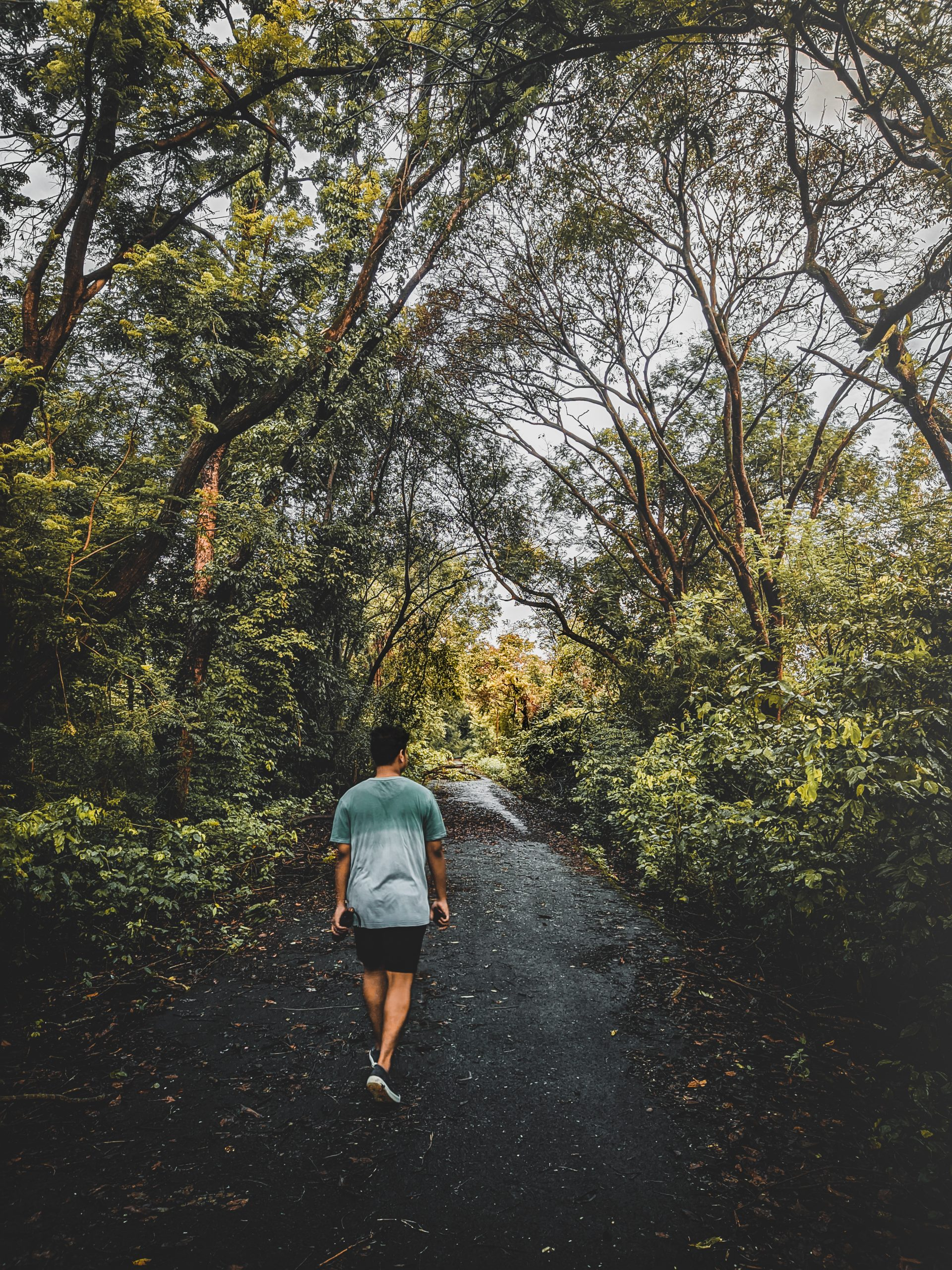 A morning walk through jungle