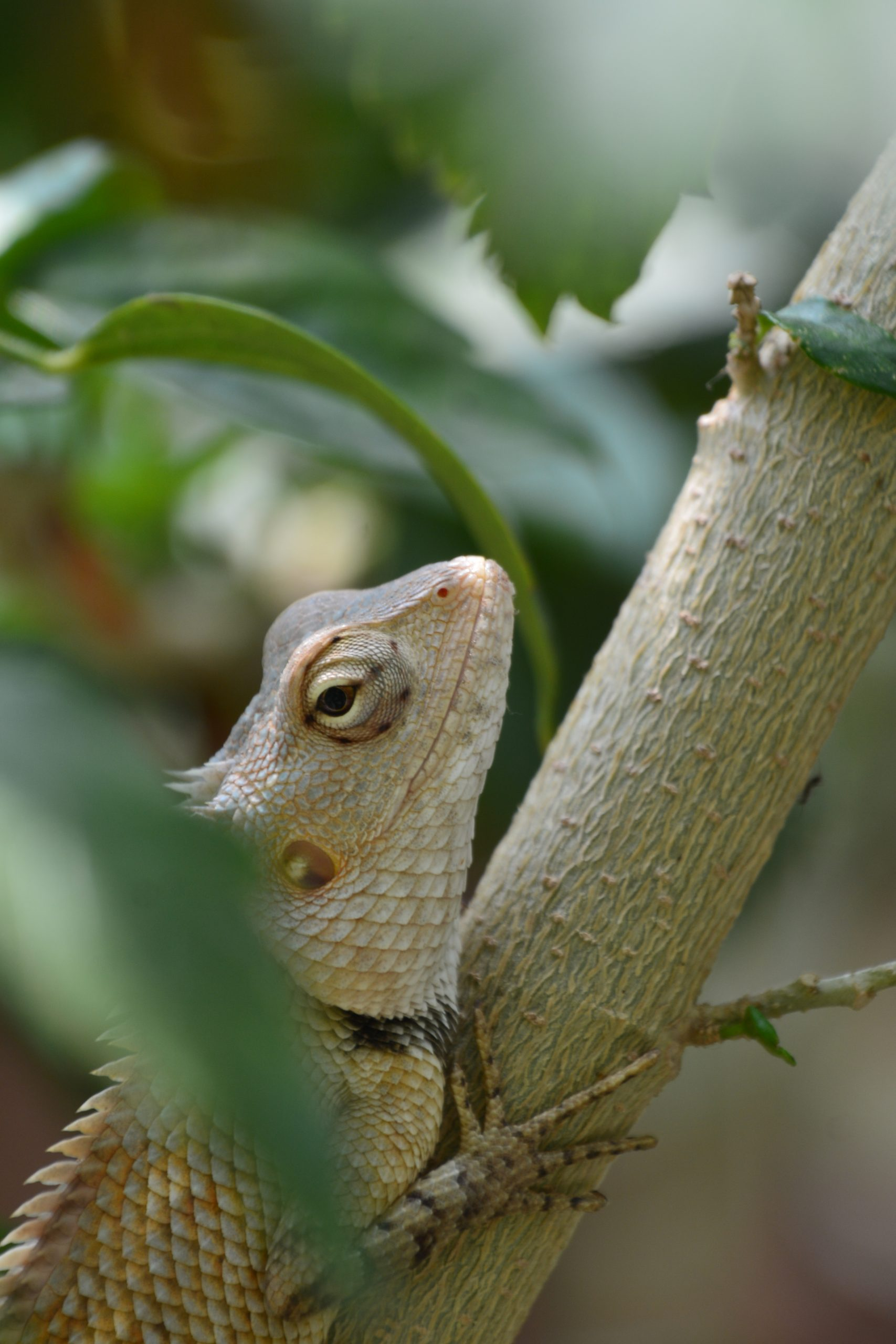Reptile clinging on a tree branch