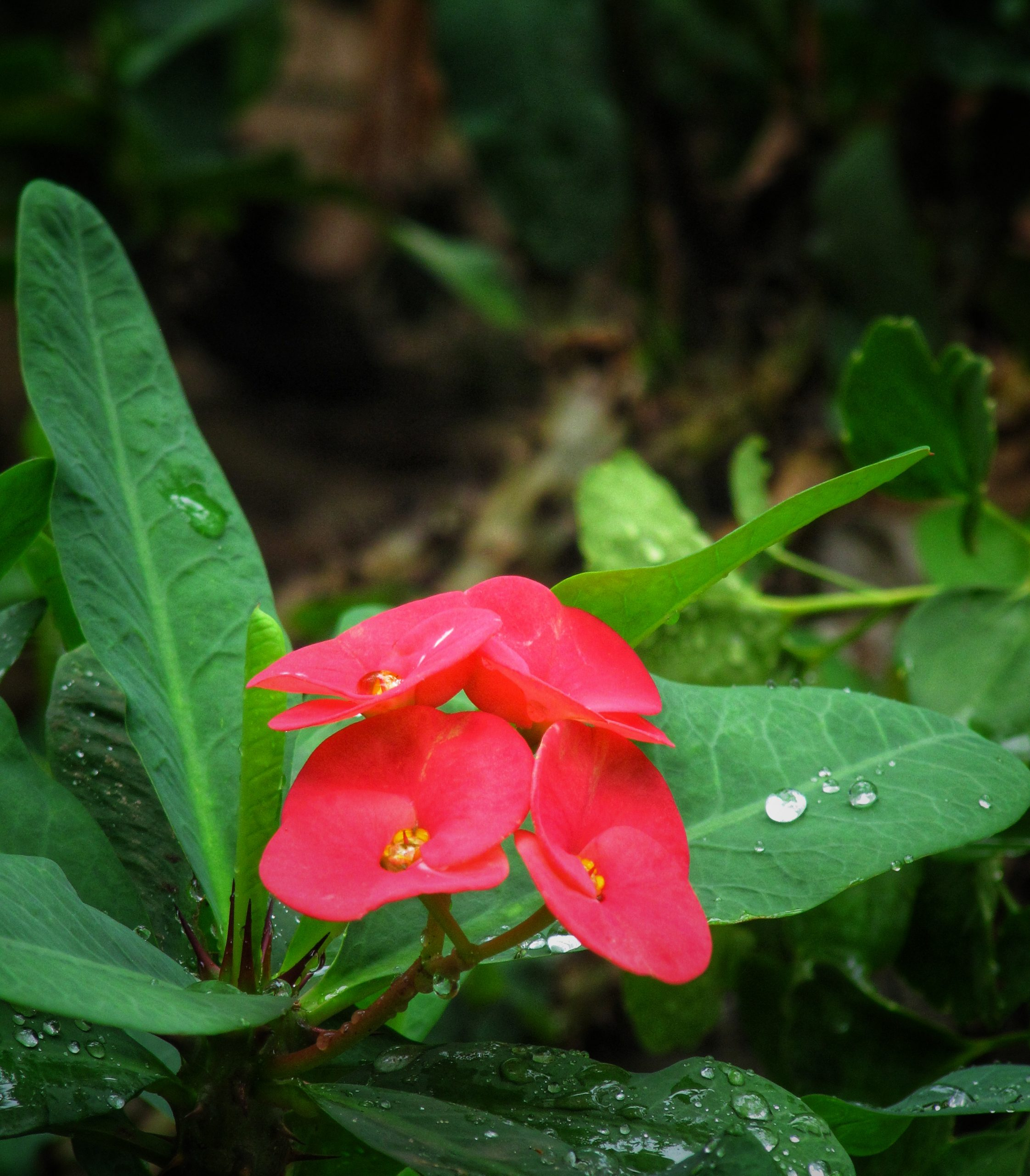 raindrops on red flowers