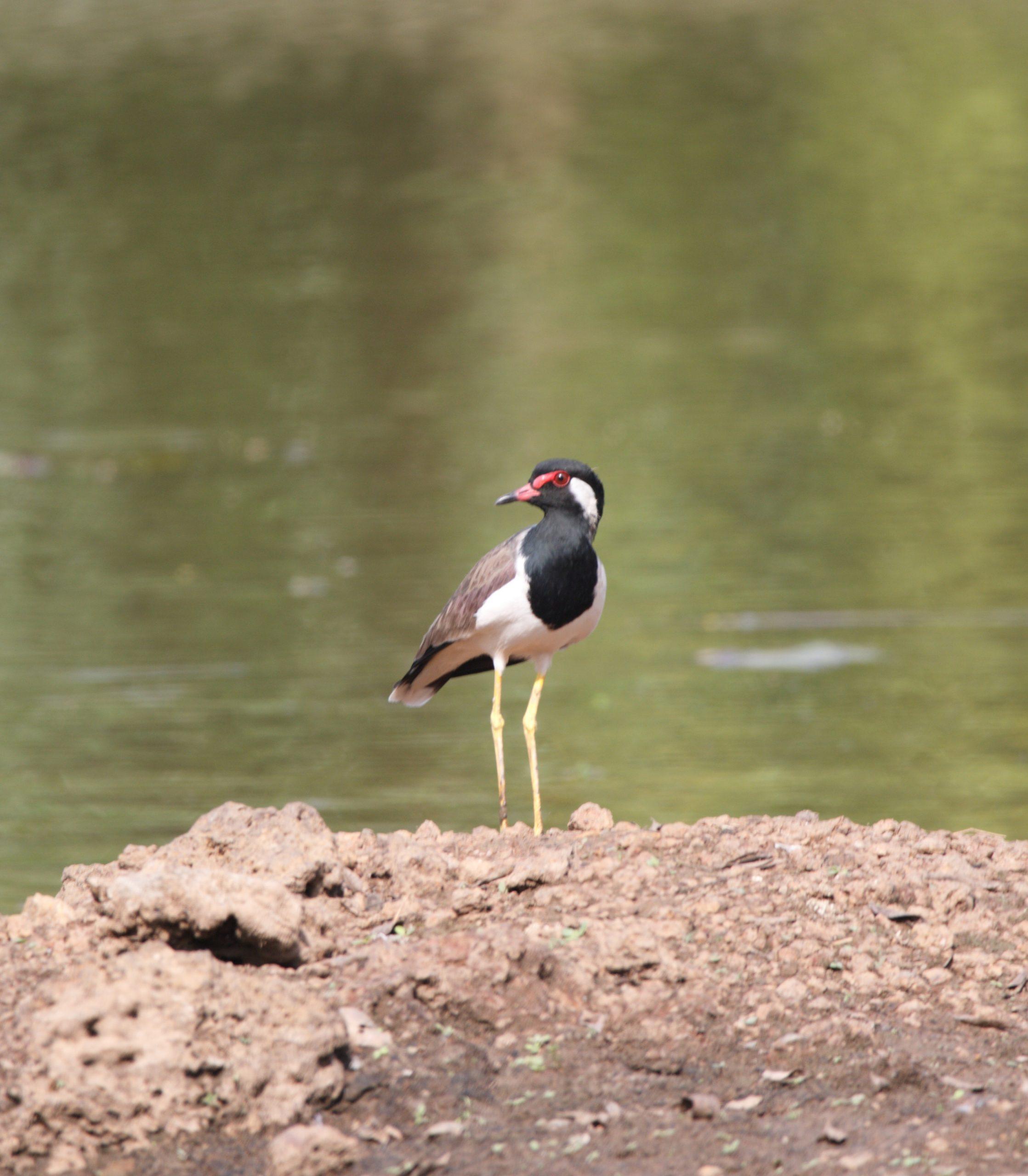 Bird beside a pond
