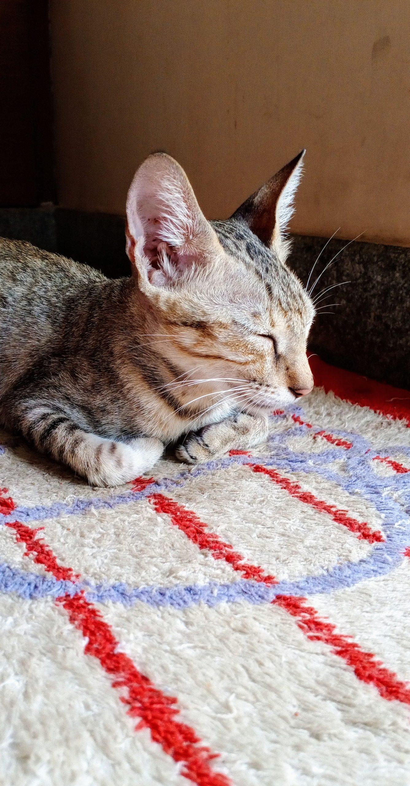 A sleepy cat