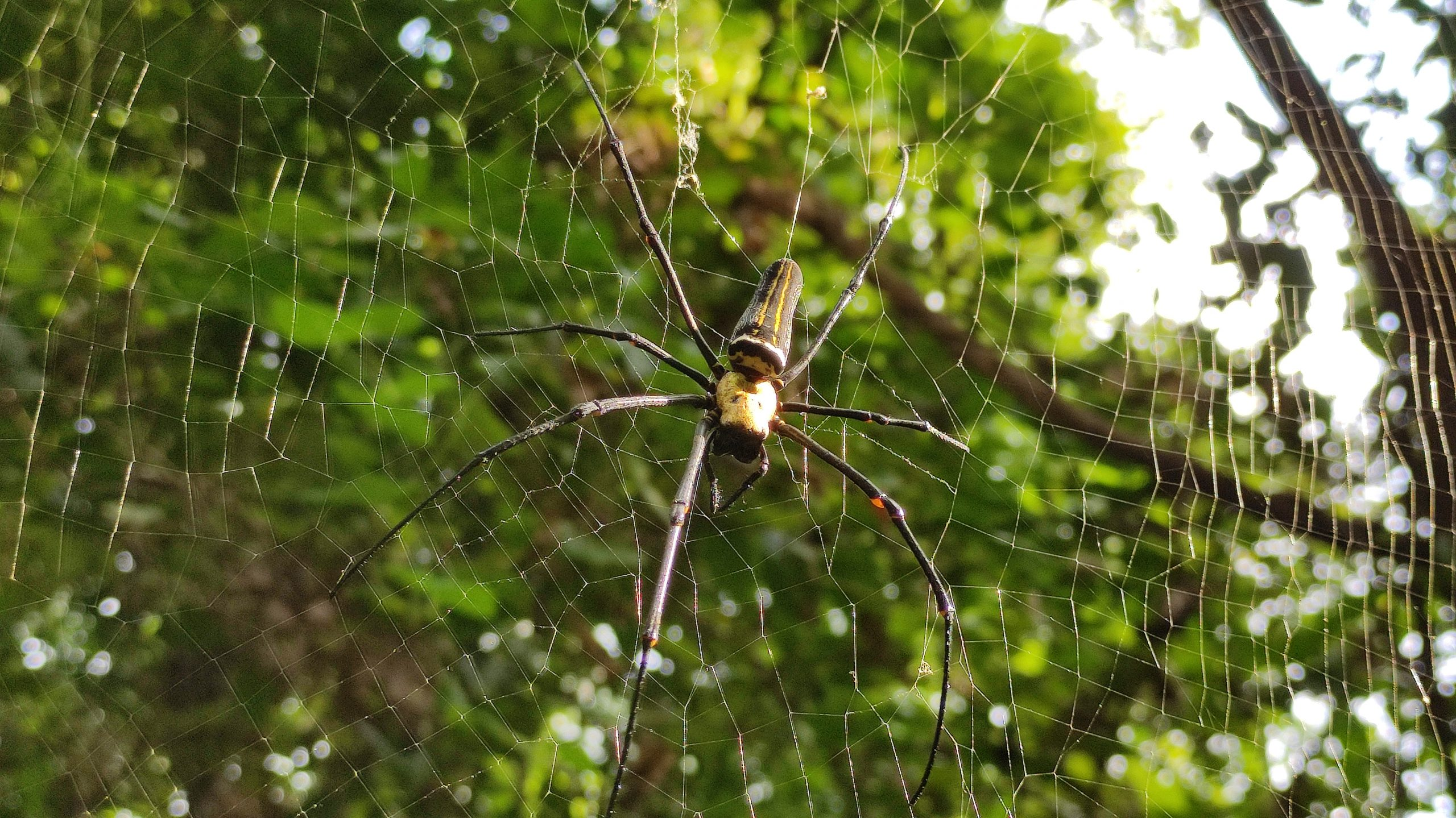 A spider in his net