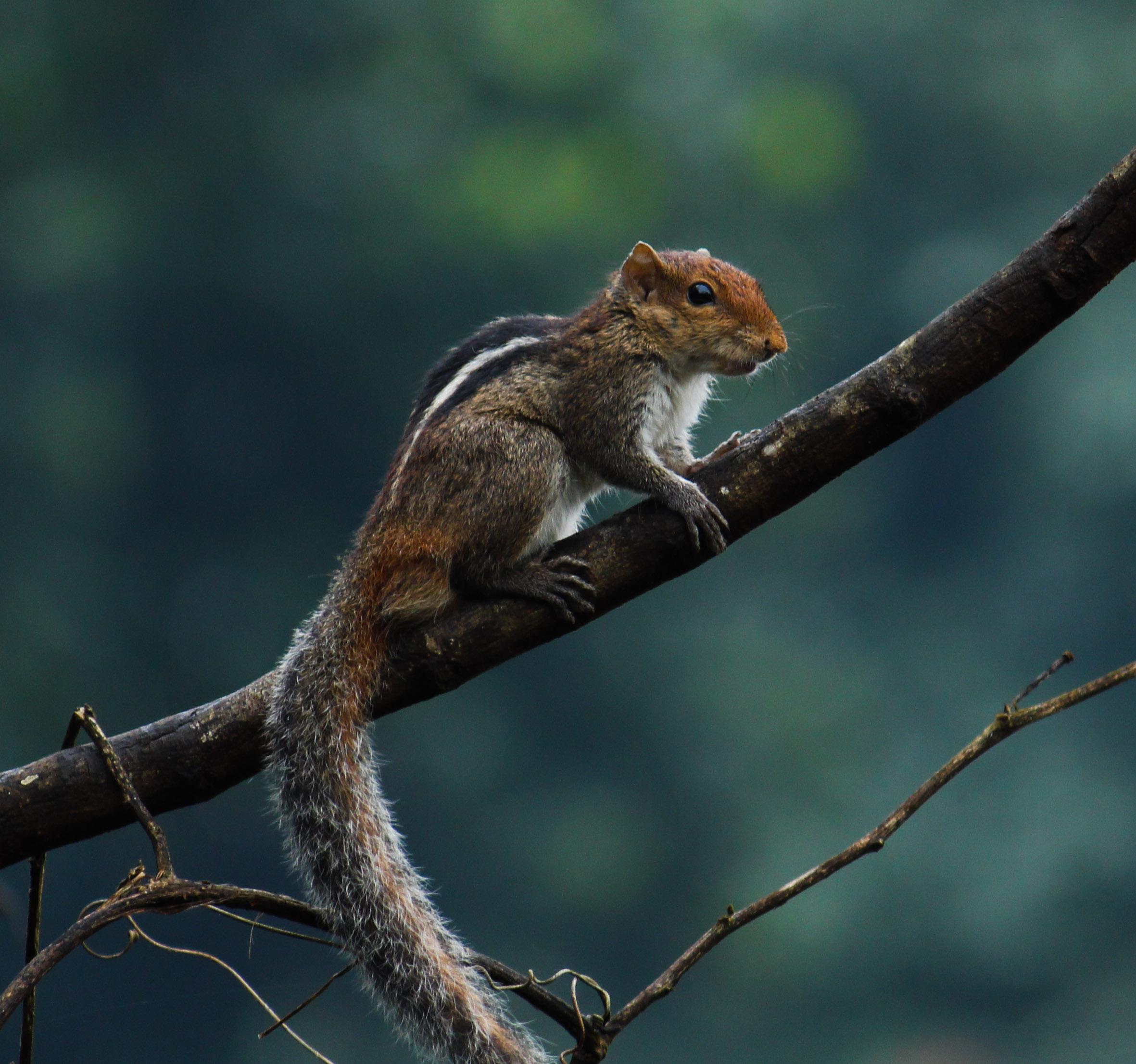 A squirrel on a plant