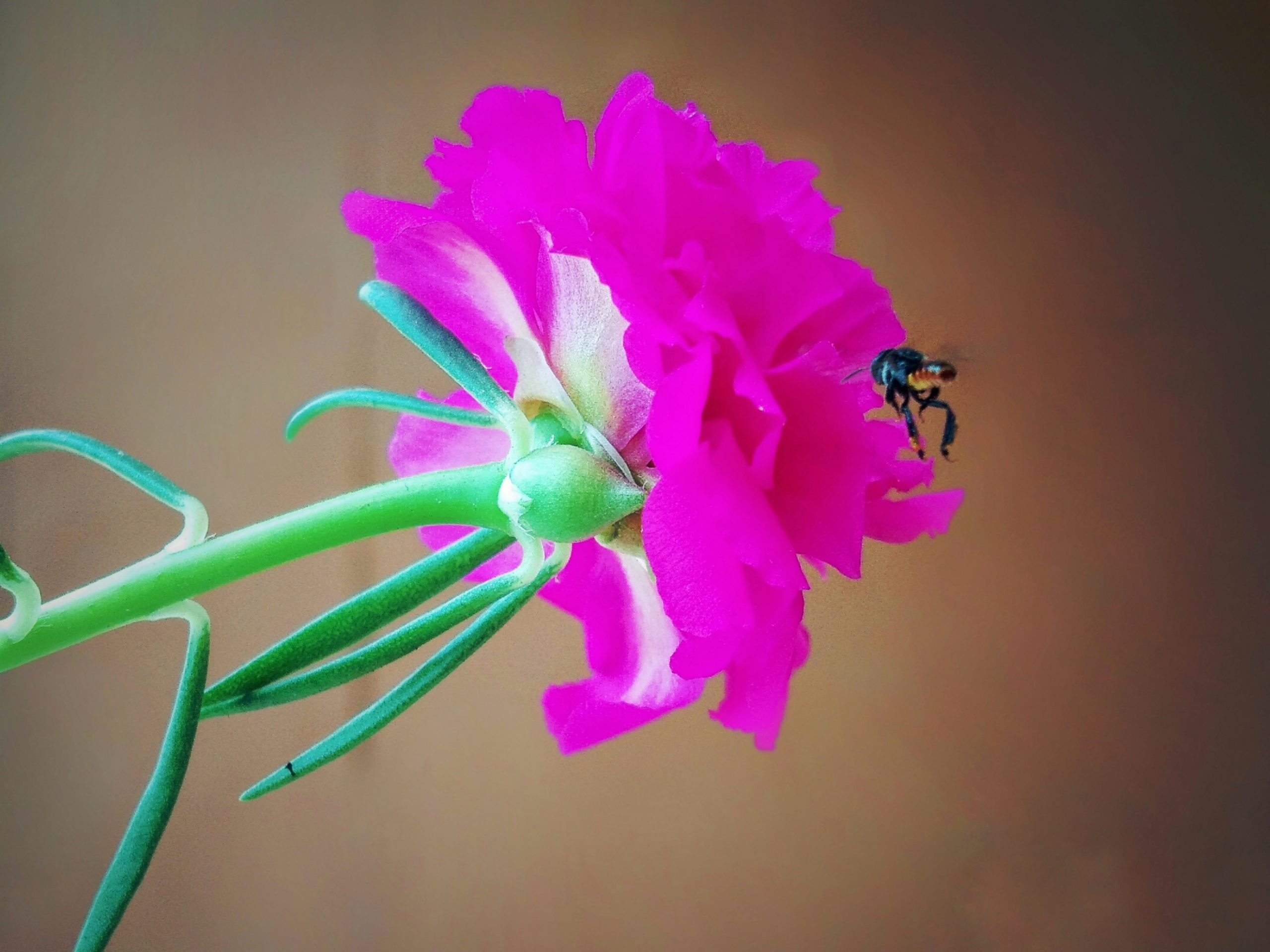 An insect on a pink flower